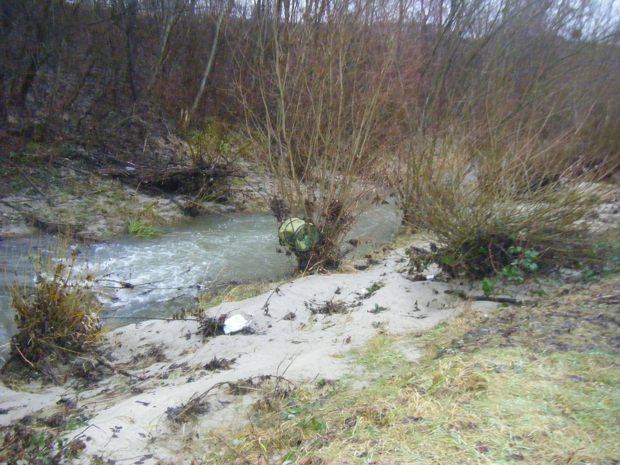 Sand-Ablagerungen am Allmannsweiler Bach durch die Überspülungen der Halbinsel, in einem Weidegebüsch ein Garten-Abfallsack. Wo der wohl herkommt?