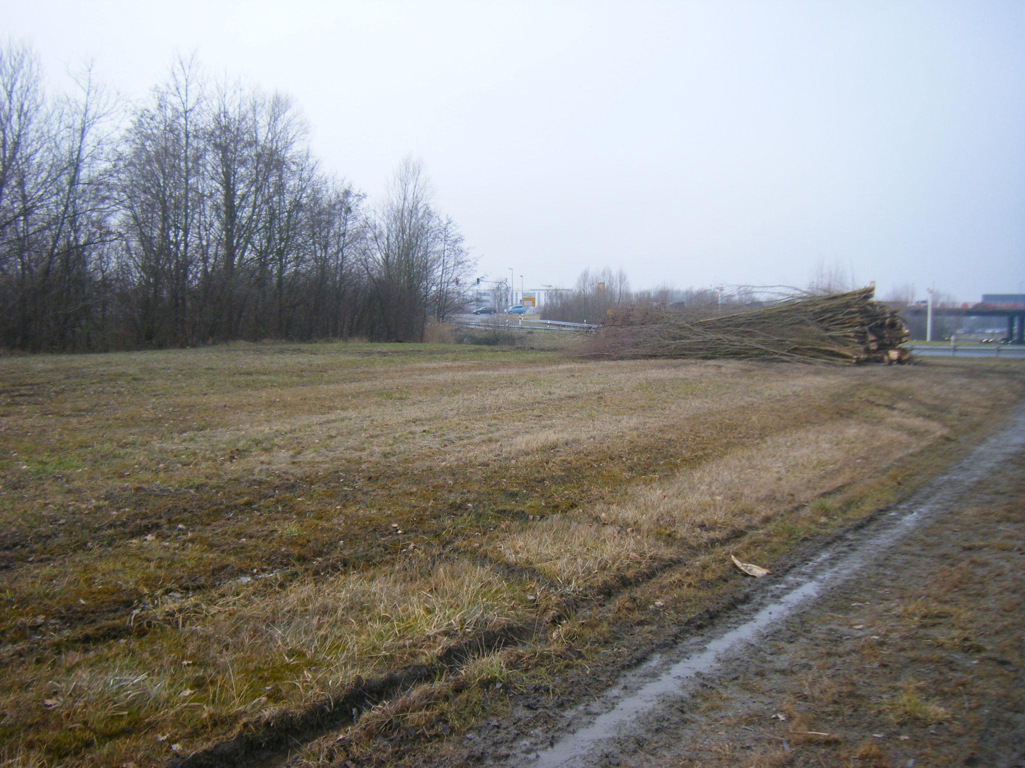 die gefällten Bäume wurden nicht am Ort liegen gelassen, sondern auf die Hornkleewiese hoch geräumt, wo sie für den Biber nicht erreichbar sind.