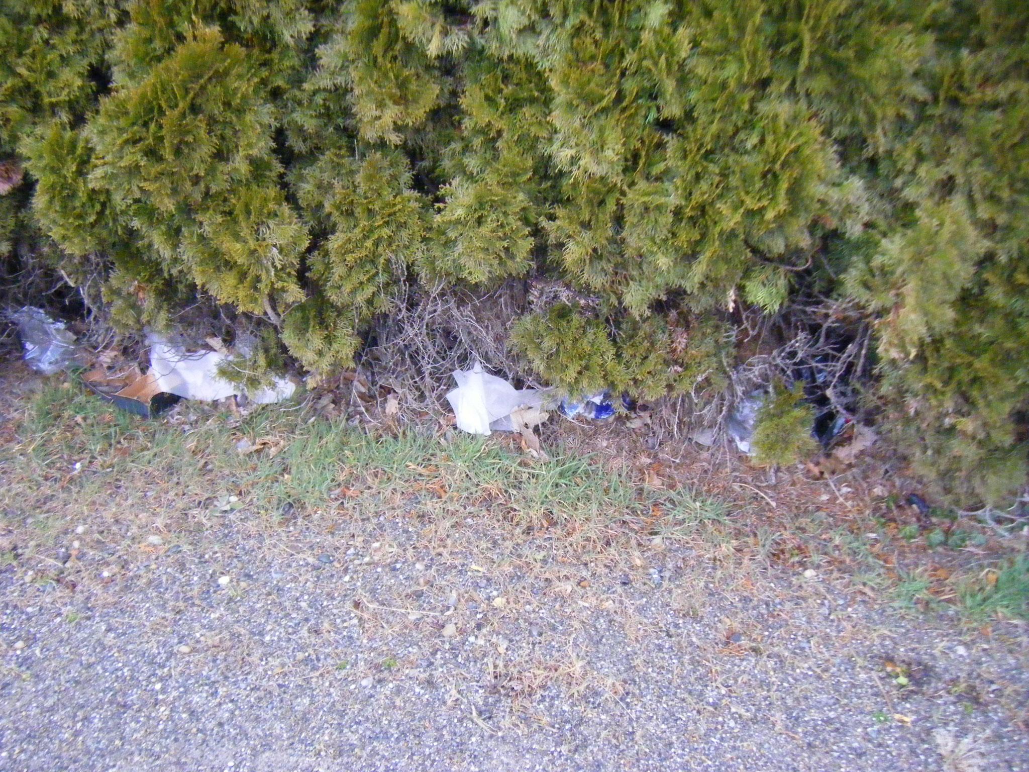 am Fuß dieses Gebüsches am ZF-Parkplatz gibt es kein müllfreies Fleckchen mehr