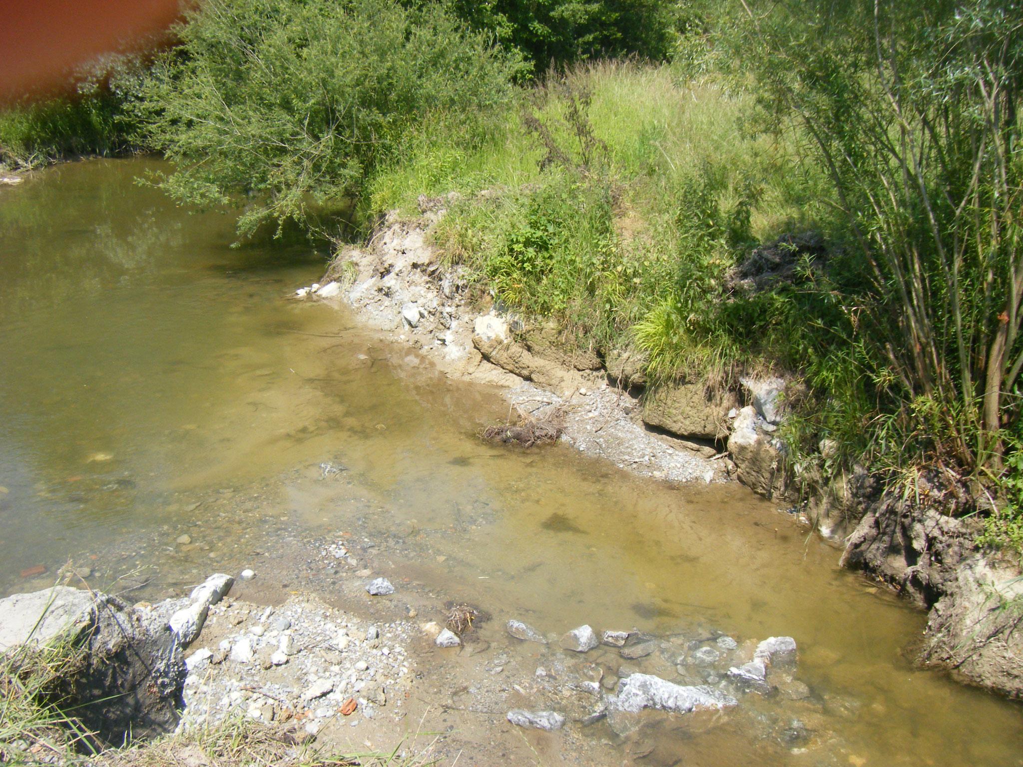 die ehemalige Fischtreppe ist jetzt fast ein natürliches Bächlein, das dem Allmannsweiler Bach zufliesst