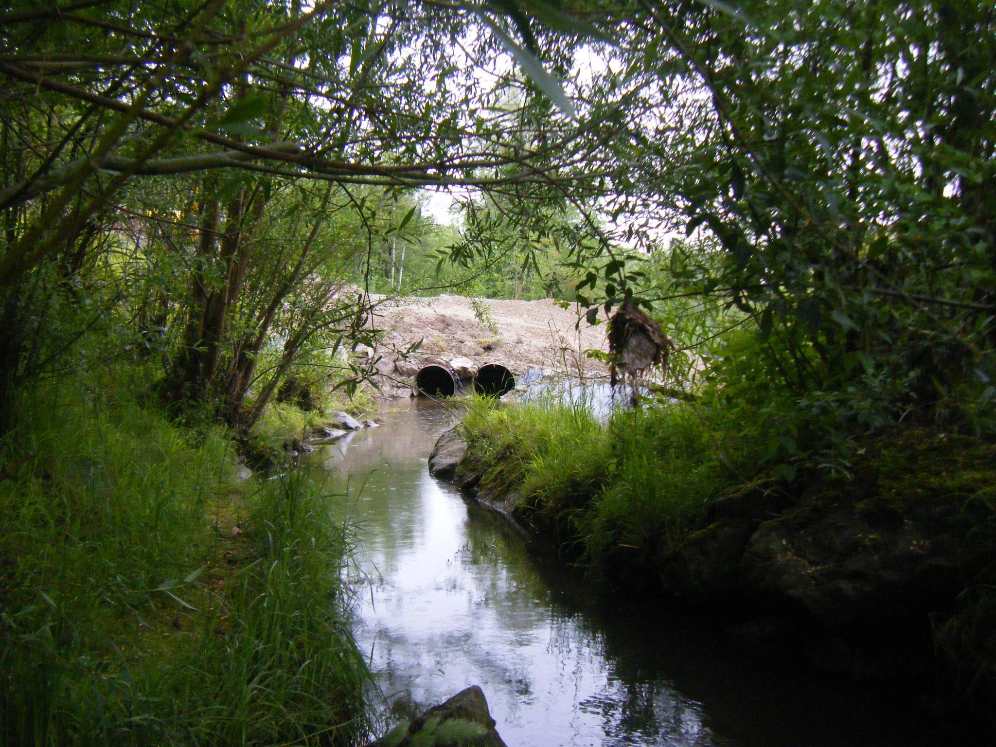 Die Umleitung des Allmannsweiler Baches erfolgt in einer Weise, in der der Bach seinen Wasserpegel nicht verändern muss