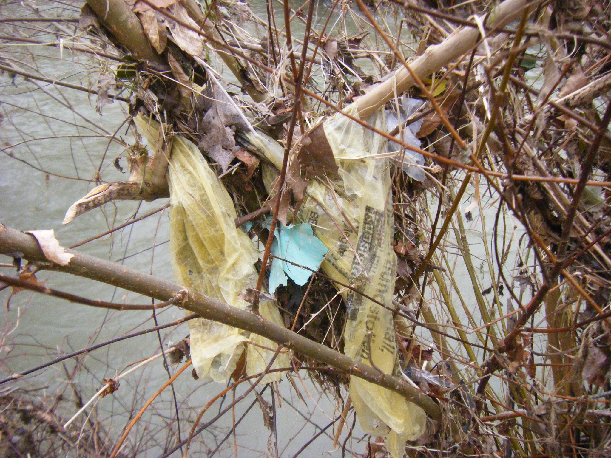 In diesem Gebüsch hängen sogar gleich 2 gelbe Säcke, ihr Inhalt ist jetzt wohl im Bodensee