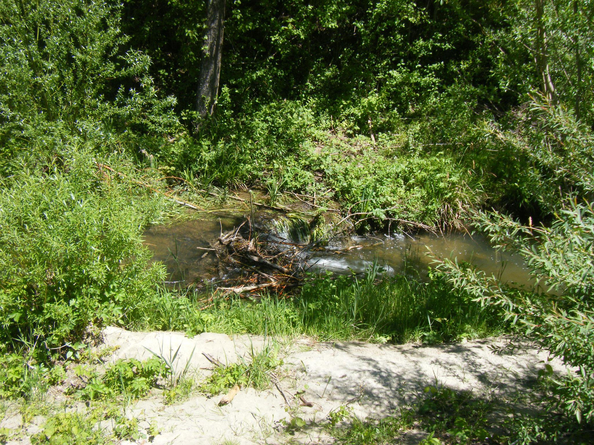 etwa 20 m später: noch ein kleinerer Damm mit ca. 40 cm Wasserspiegel-Höhenunterschied