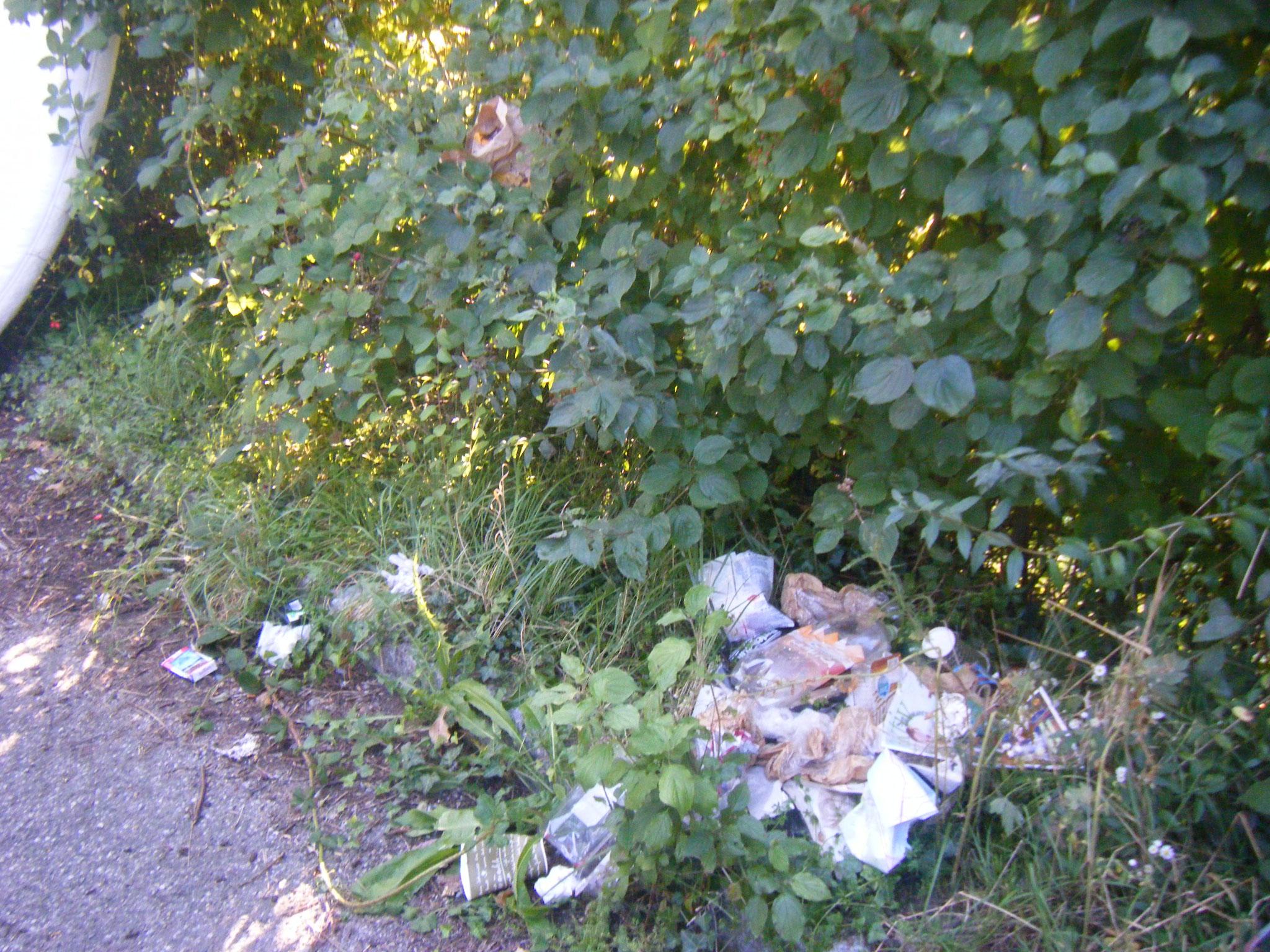 am ZF-Parkplatz Flugplatzstr entwickeln sich regelrechte Müllnester, sogar oben im Gebüsch hängt eine Tüte