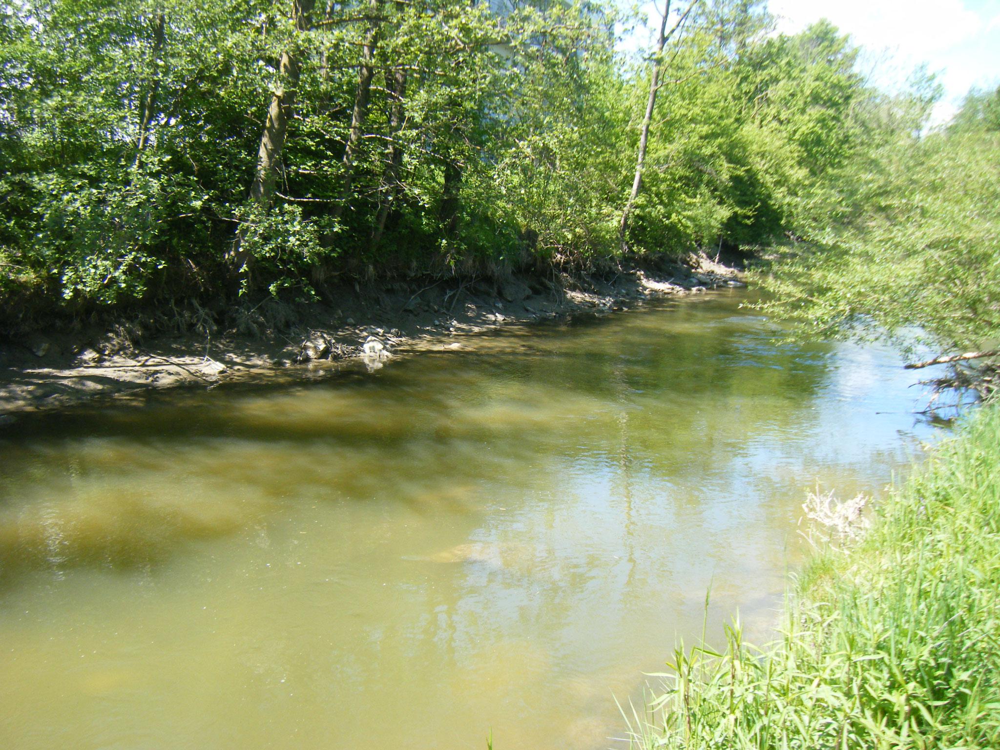 Flussaufwärts sieht man deutlich die ausgewaschen Uferböschungen, die nach der Öffung des Wehres frei liegen.