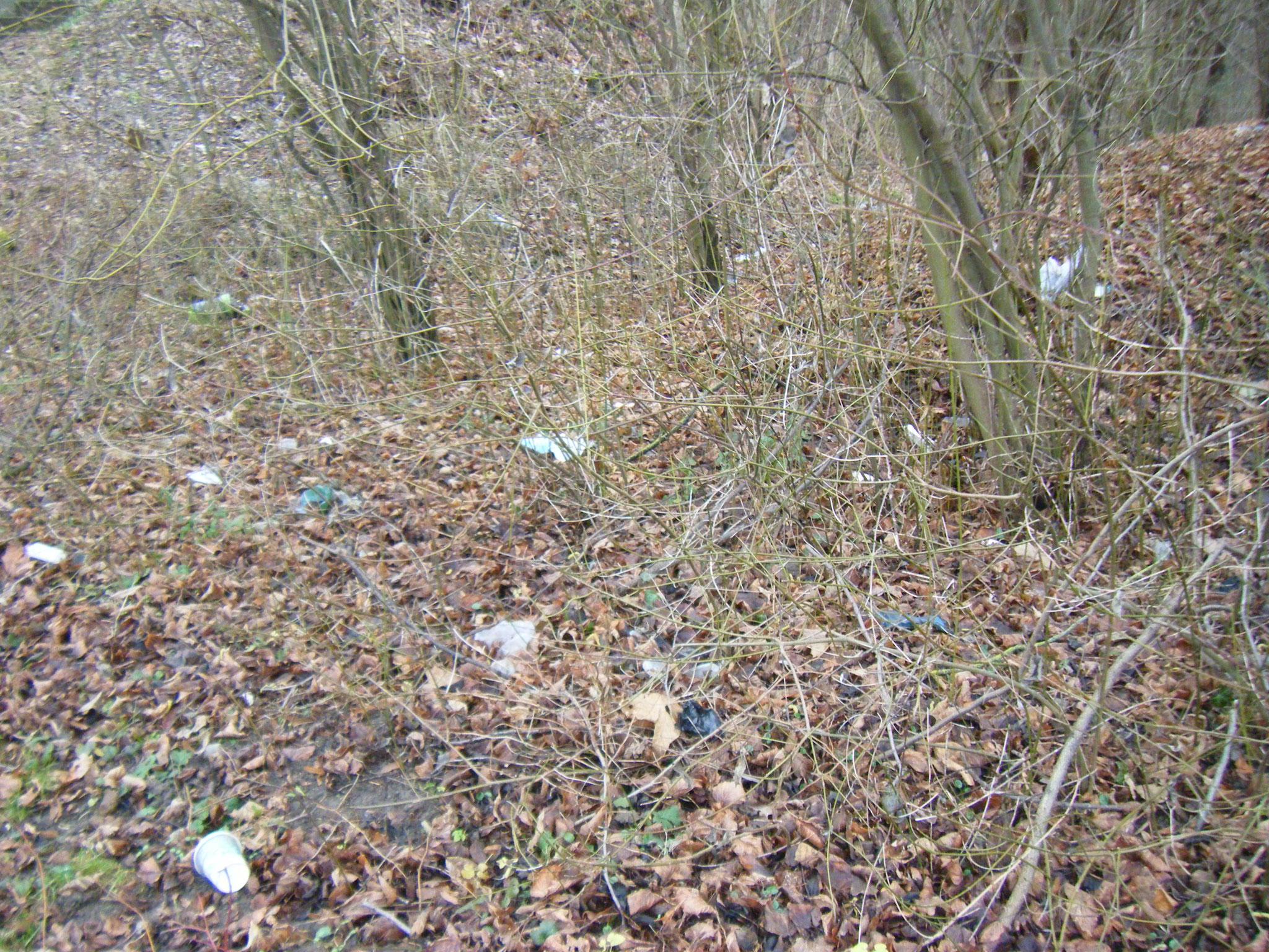 unter den Sträuchern eine Müllkippe