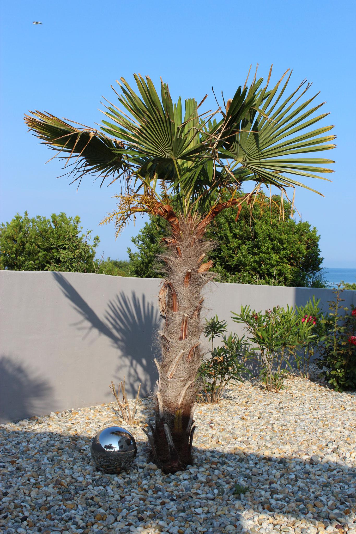 Flair durch mediterrane Pflanzenwelt