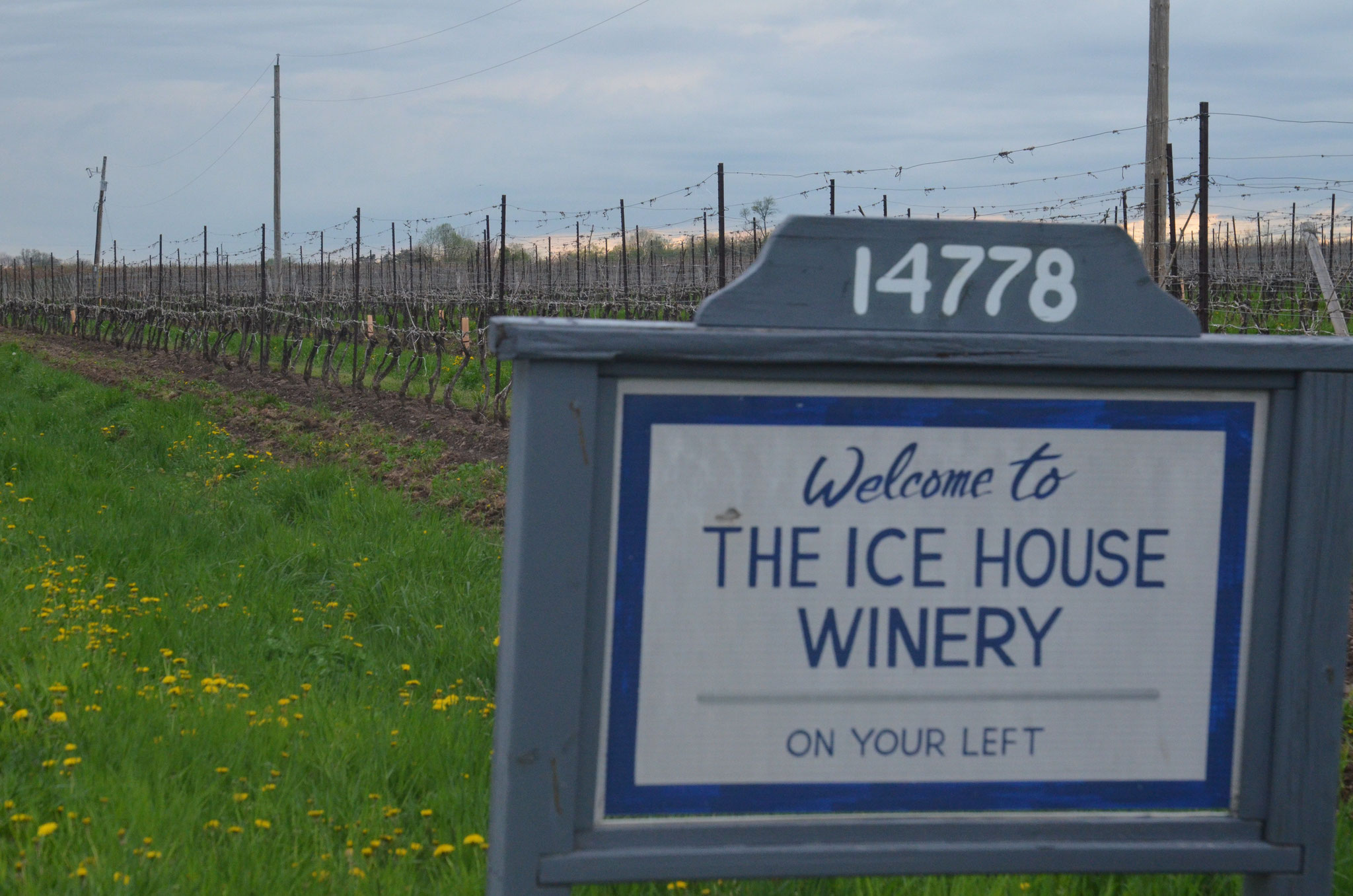 CANADA/Ontario/Ice Wine producer
