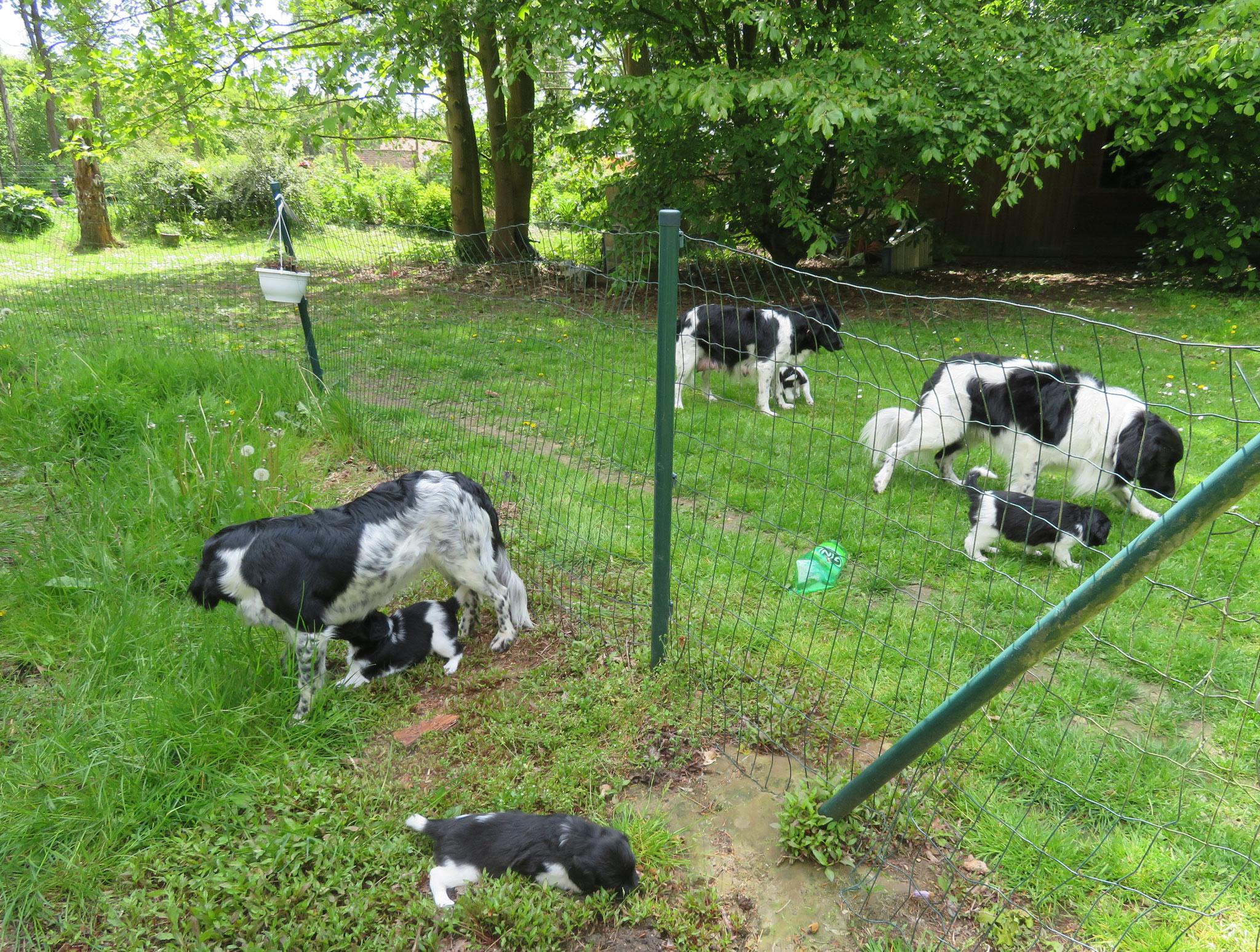 Onze eerste stapjes in de grote tuin ...