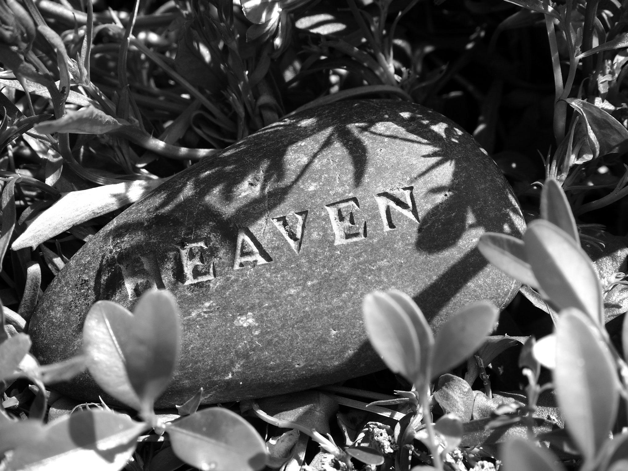 Impressionen Grab Frank Giering (Neustädter Friedhof, Magdeburg)