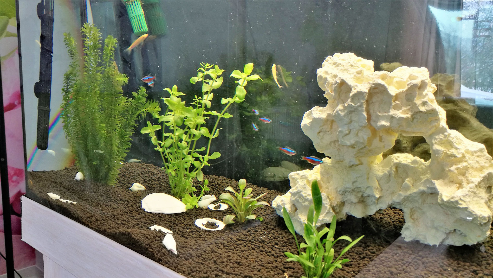 Unser schönes Aquarium