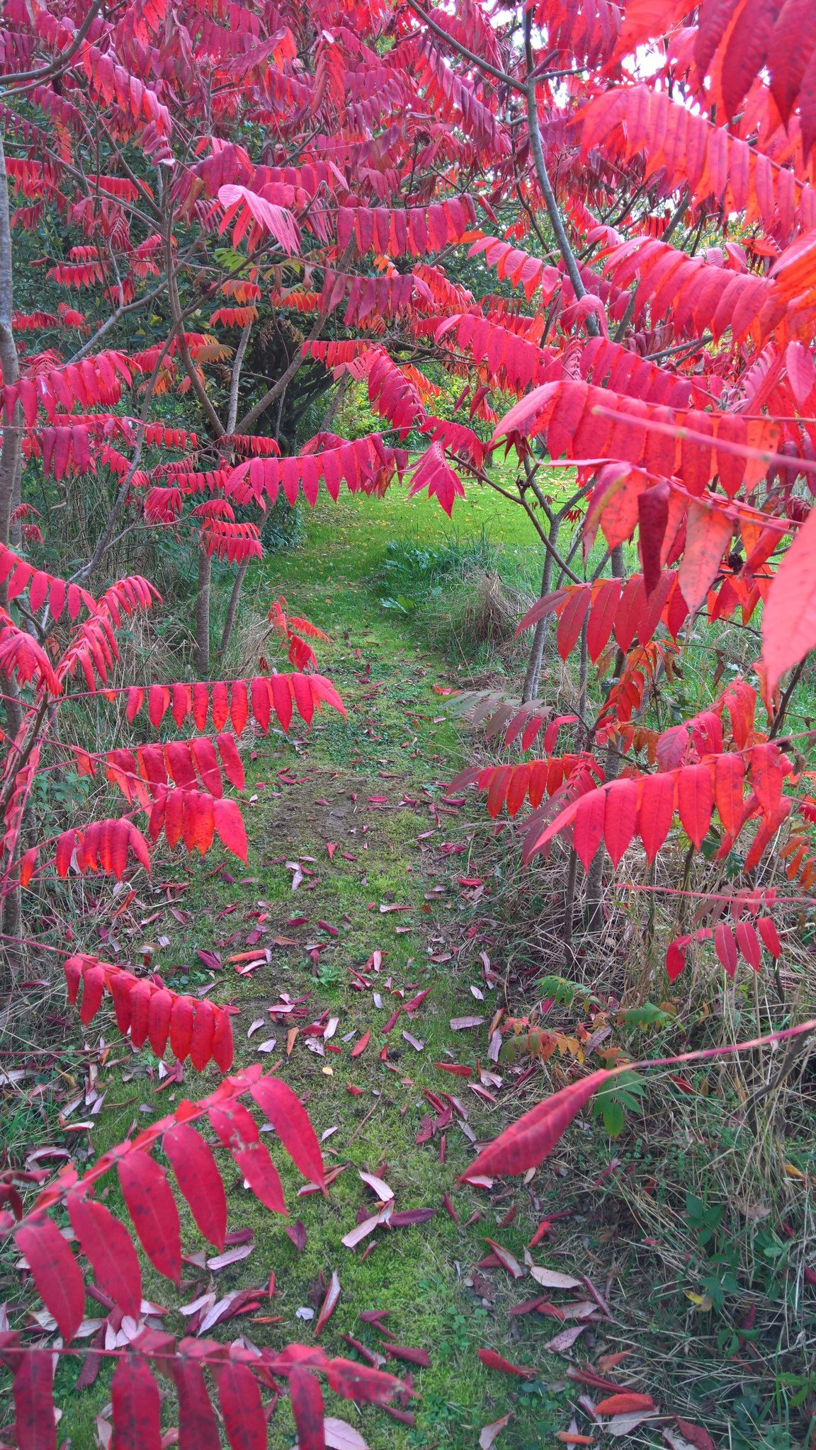 Ein Weg durch rote Blätter
