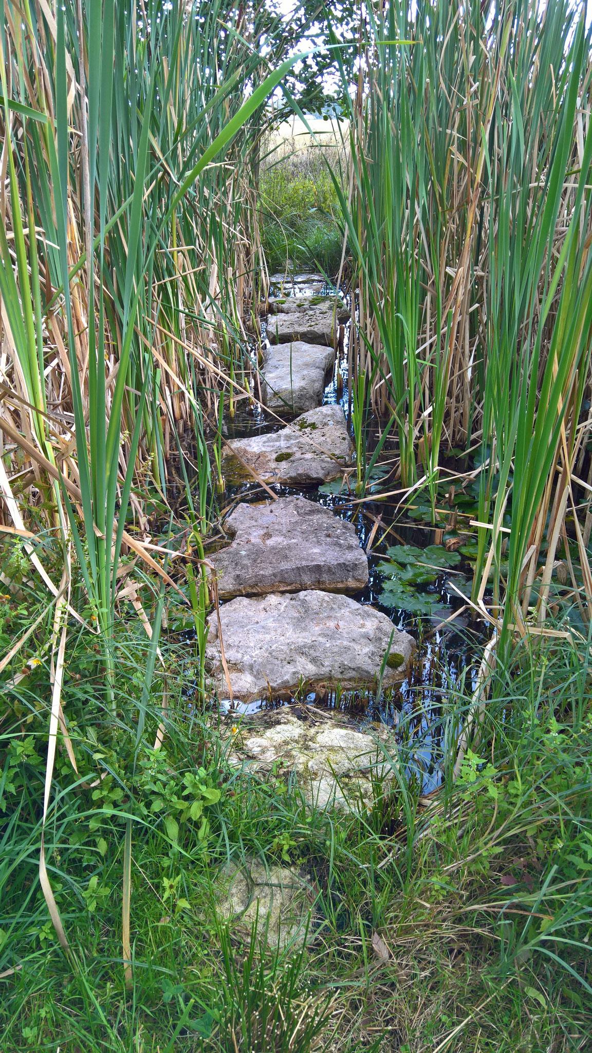 Annette hat den Durchgang über den kleinen Teich freigelegt