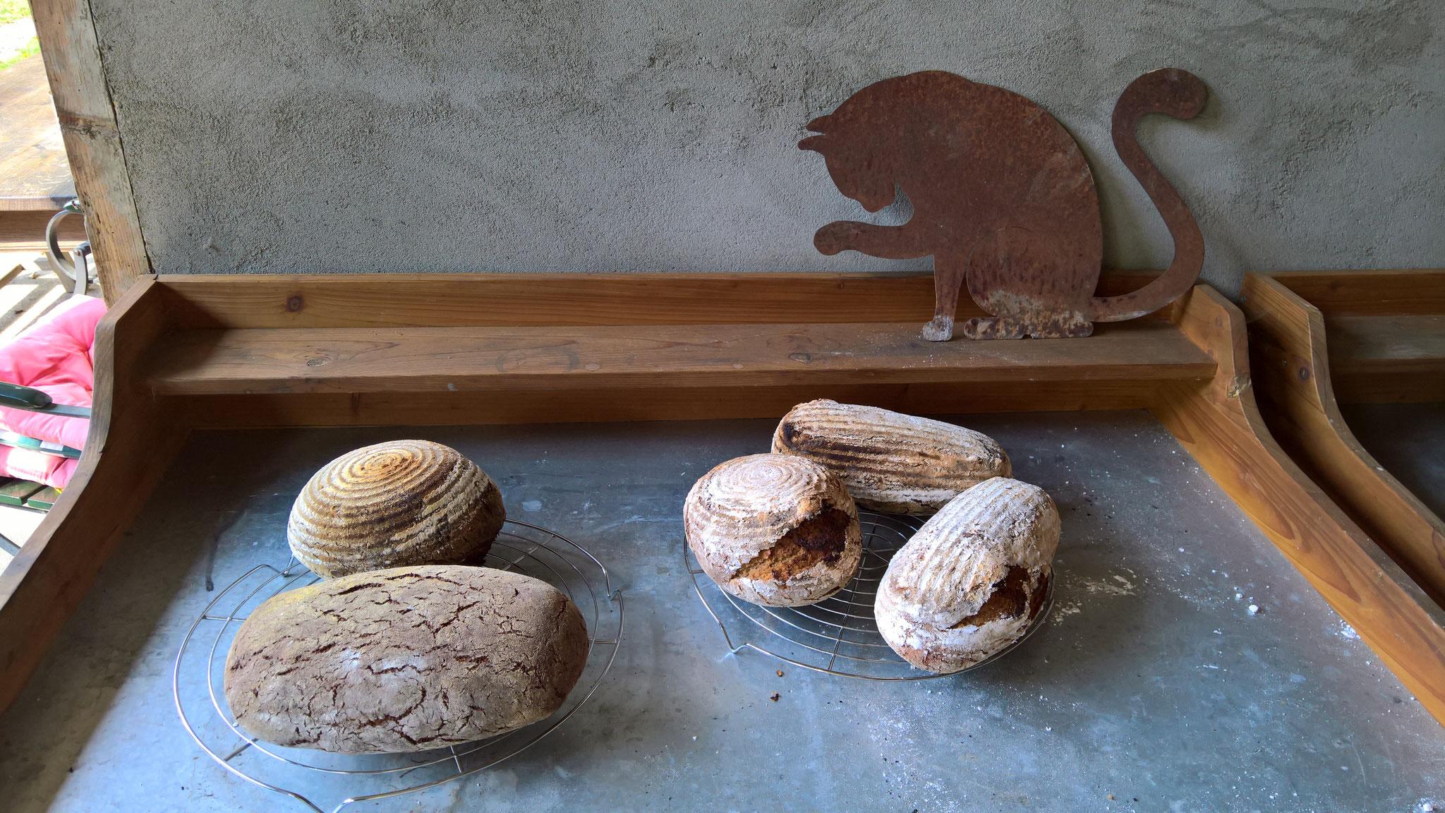 Die ganze Palette an Broten