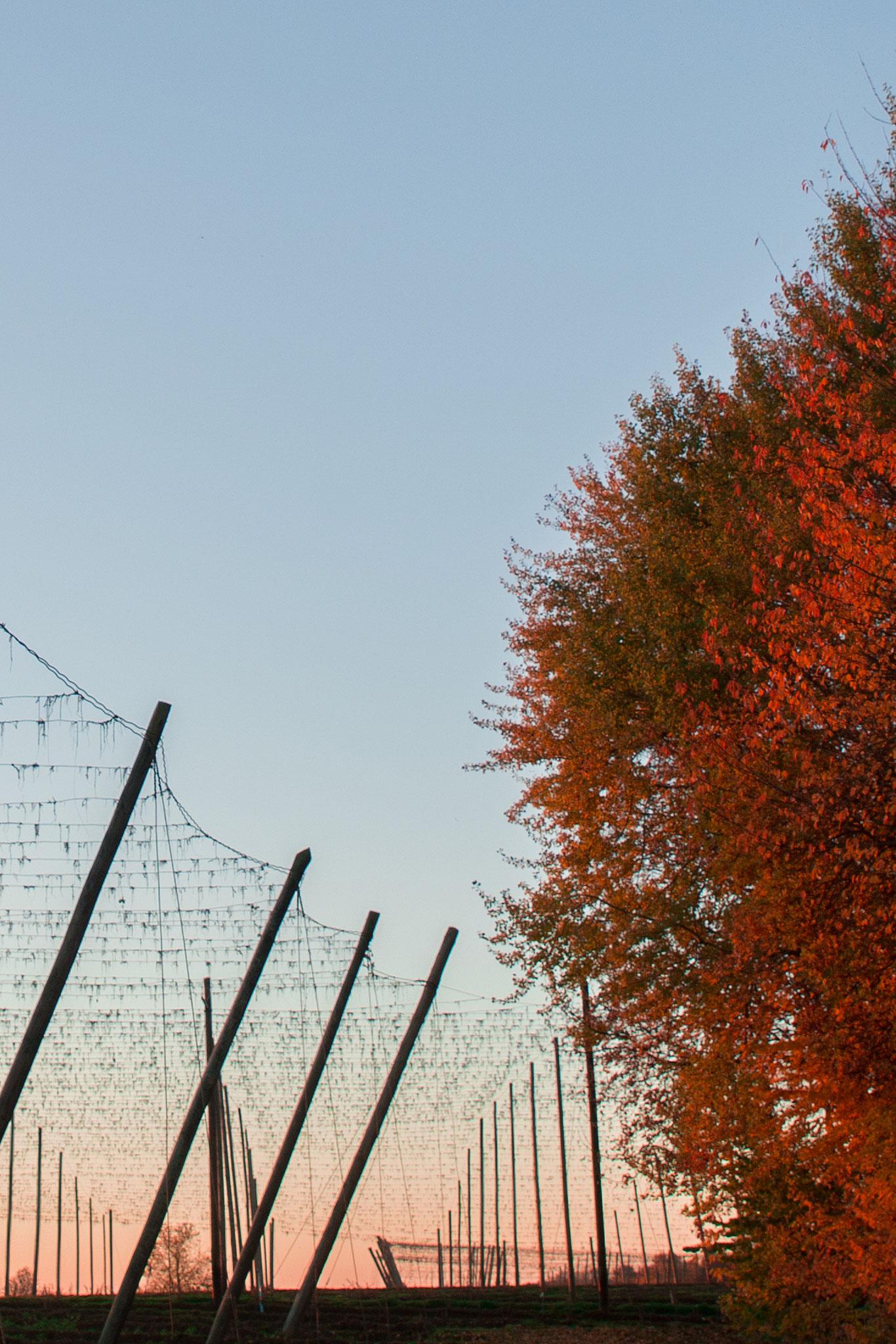 Herbst B2
