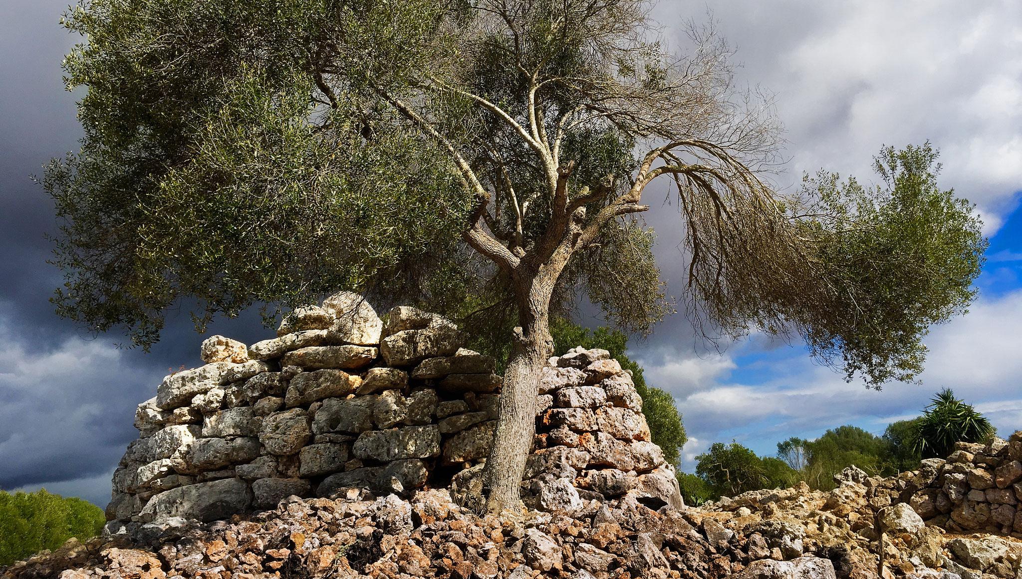 Capocorb Vela. Cultura talayótica