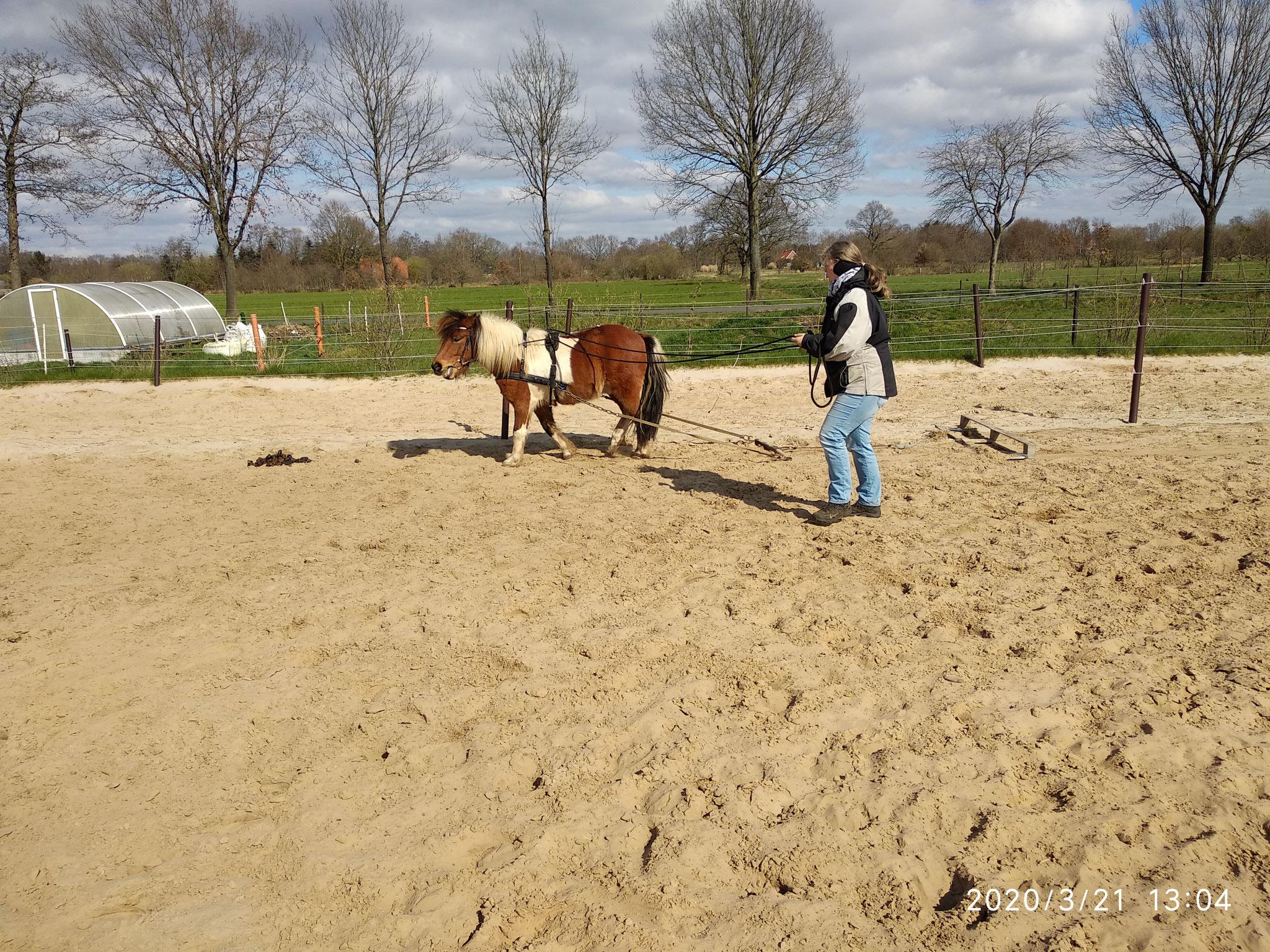Sven und Janine Robben mit Tochter bei der Pferdearbeit mit Fala, Kaja und Co
