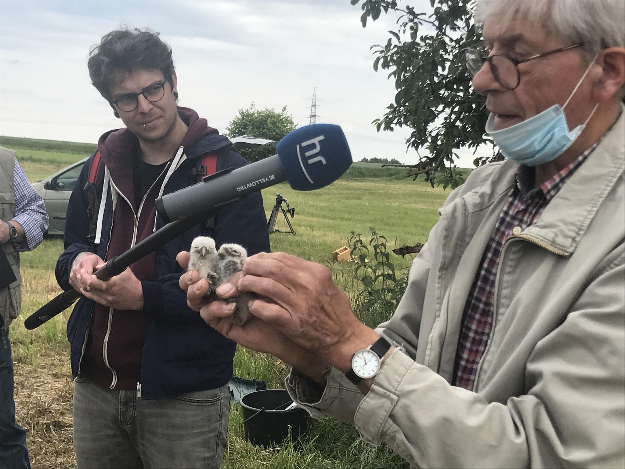 Herbert Friedrich beantwortet Fragen rund um den Steinkauz