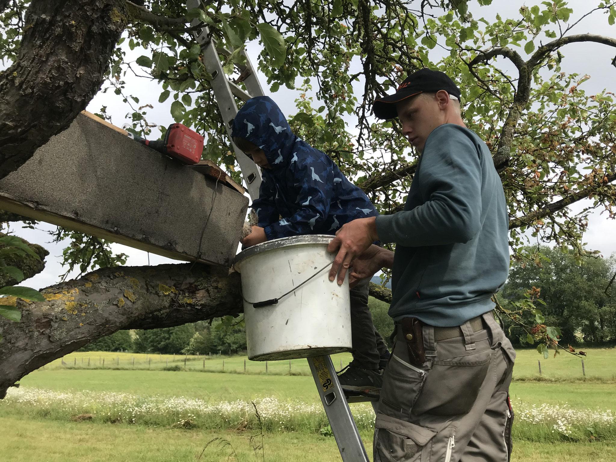 Kleine Hände helfen Leonard beim einsetzen der Küken in den Kasten