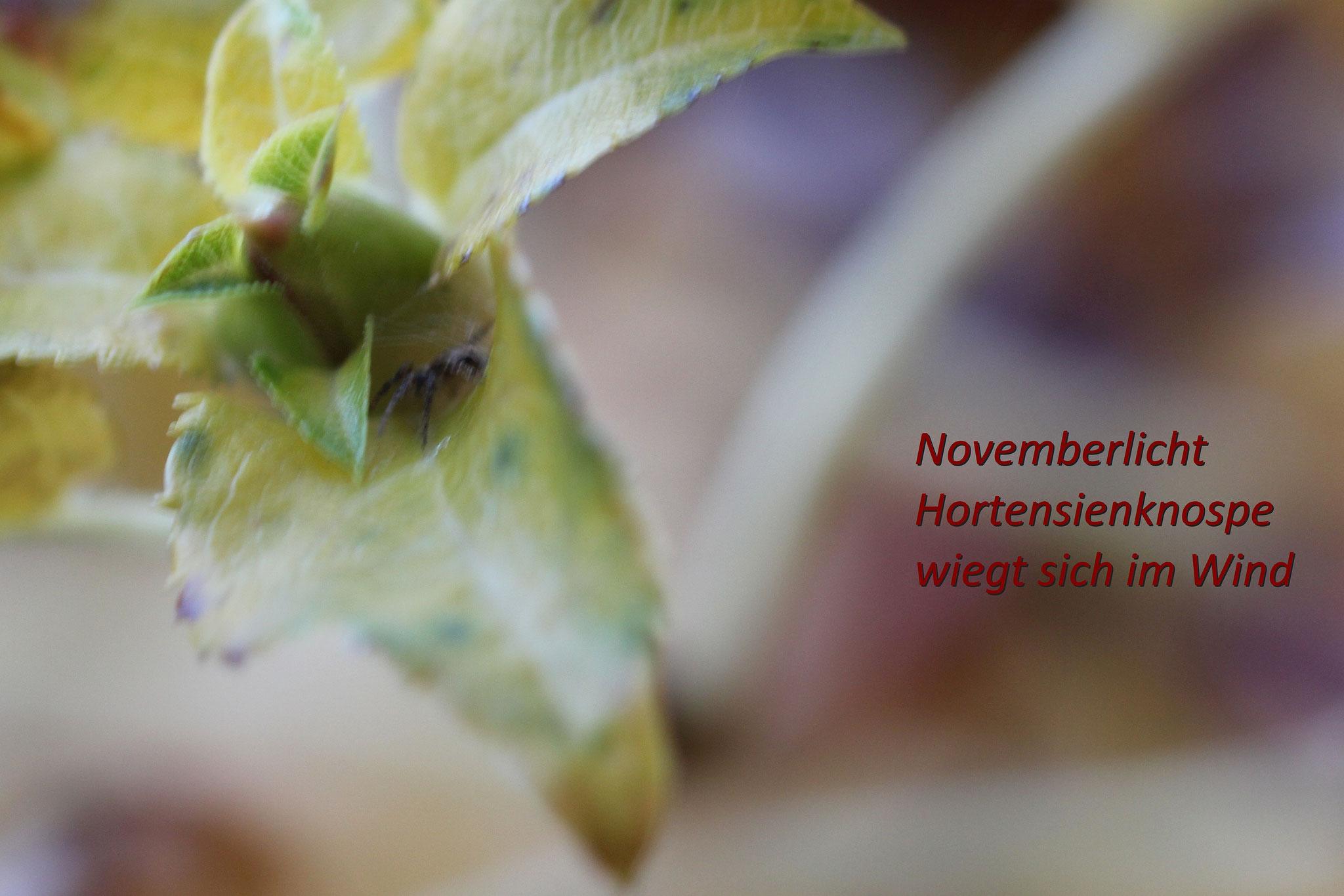 Haiku im Garten - Foto: Volker Svensson
