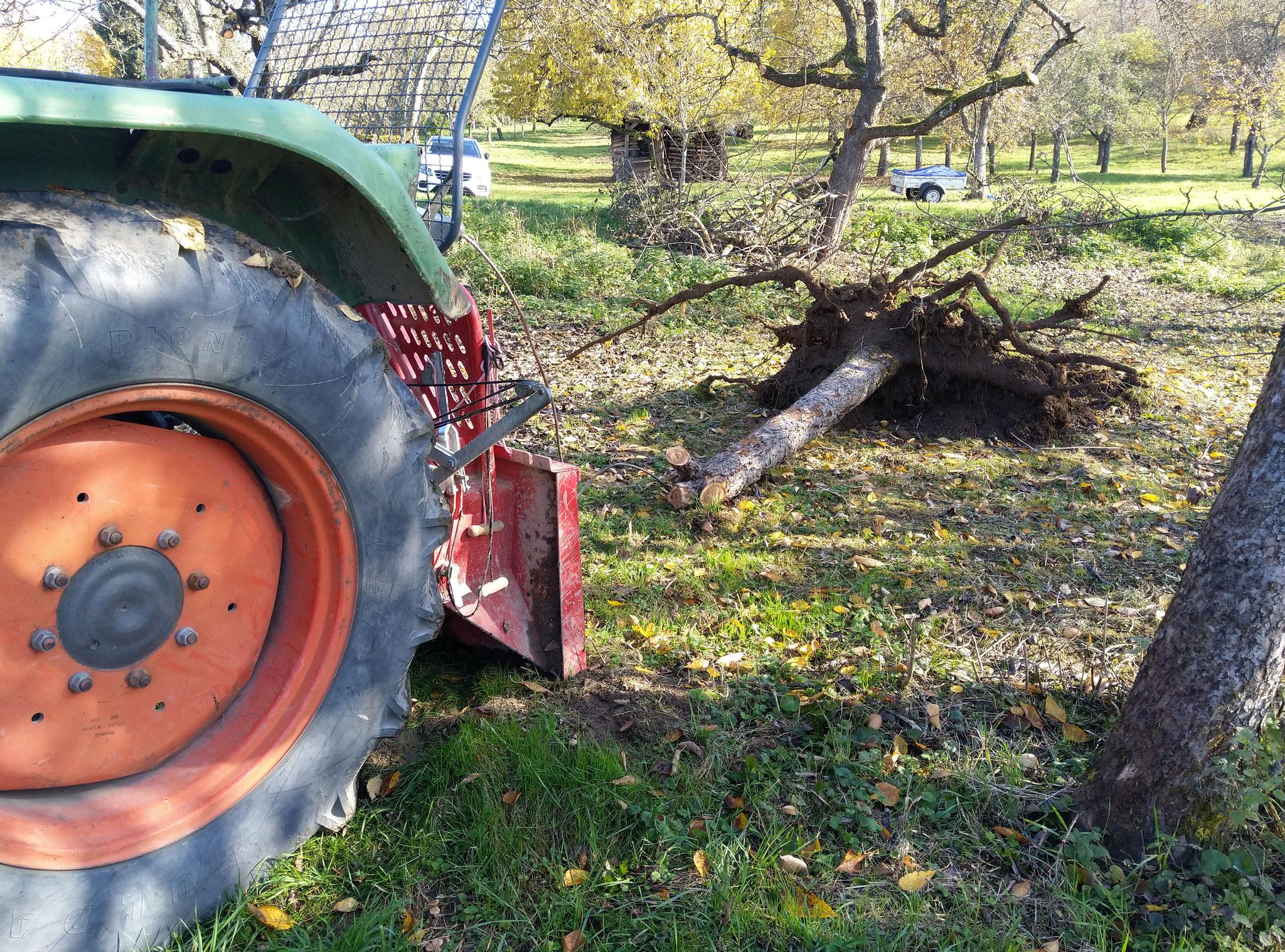 Mit der Seilwinde den Baum samt Wurzel rausziehen