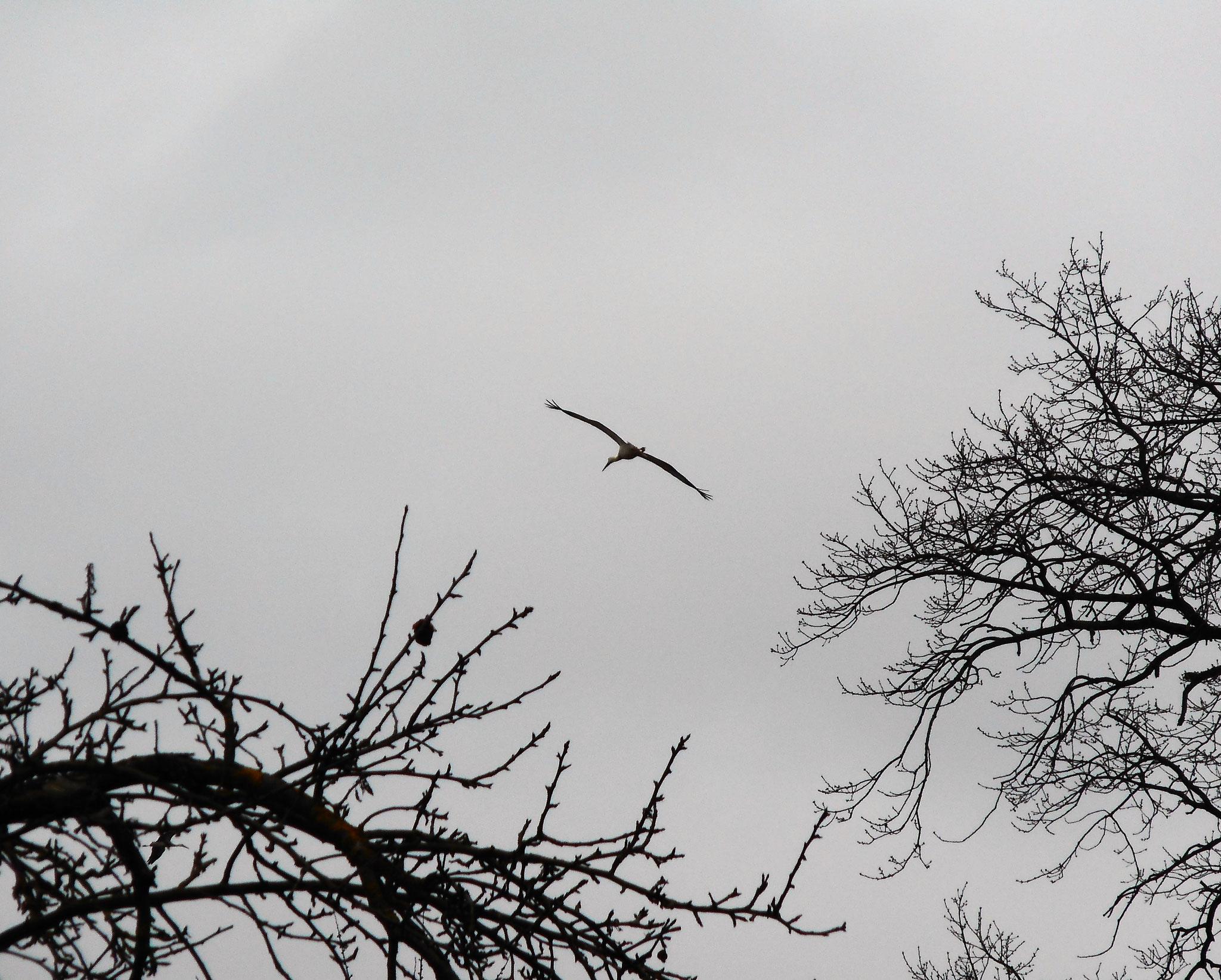 Sie fliegen wieder über Rühstädt!
