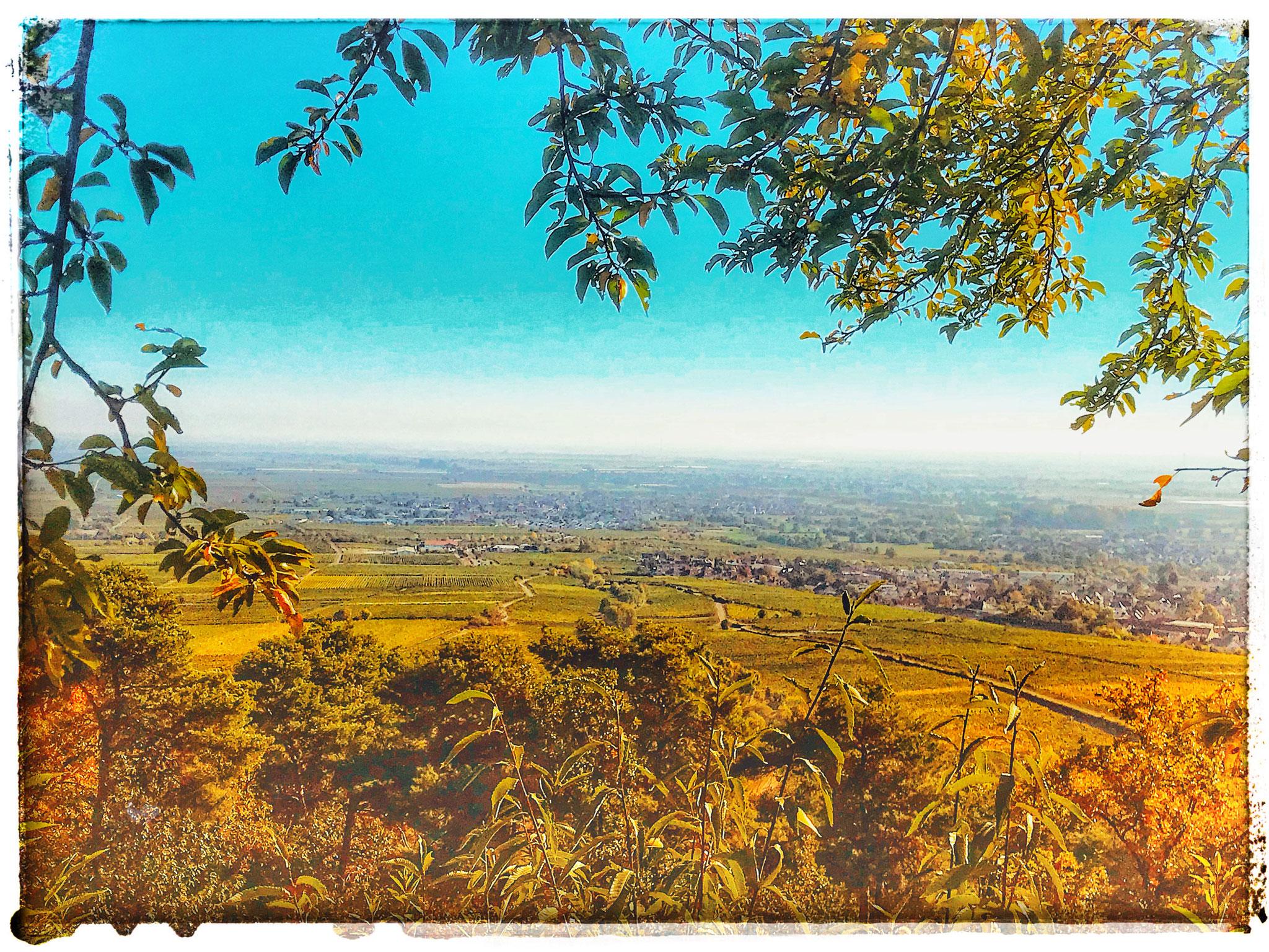 Mal einen auf Vintage Postkarte gemacht. Blick auf Speyer von der Michaeliskapelle Deidesheim