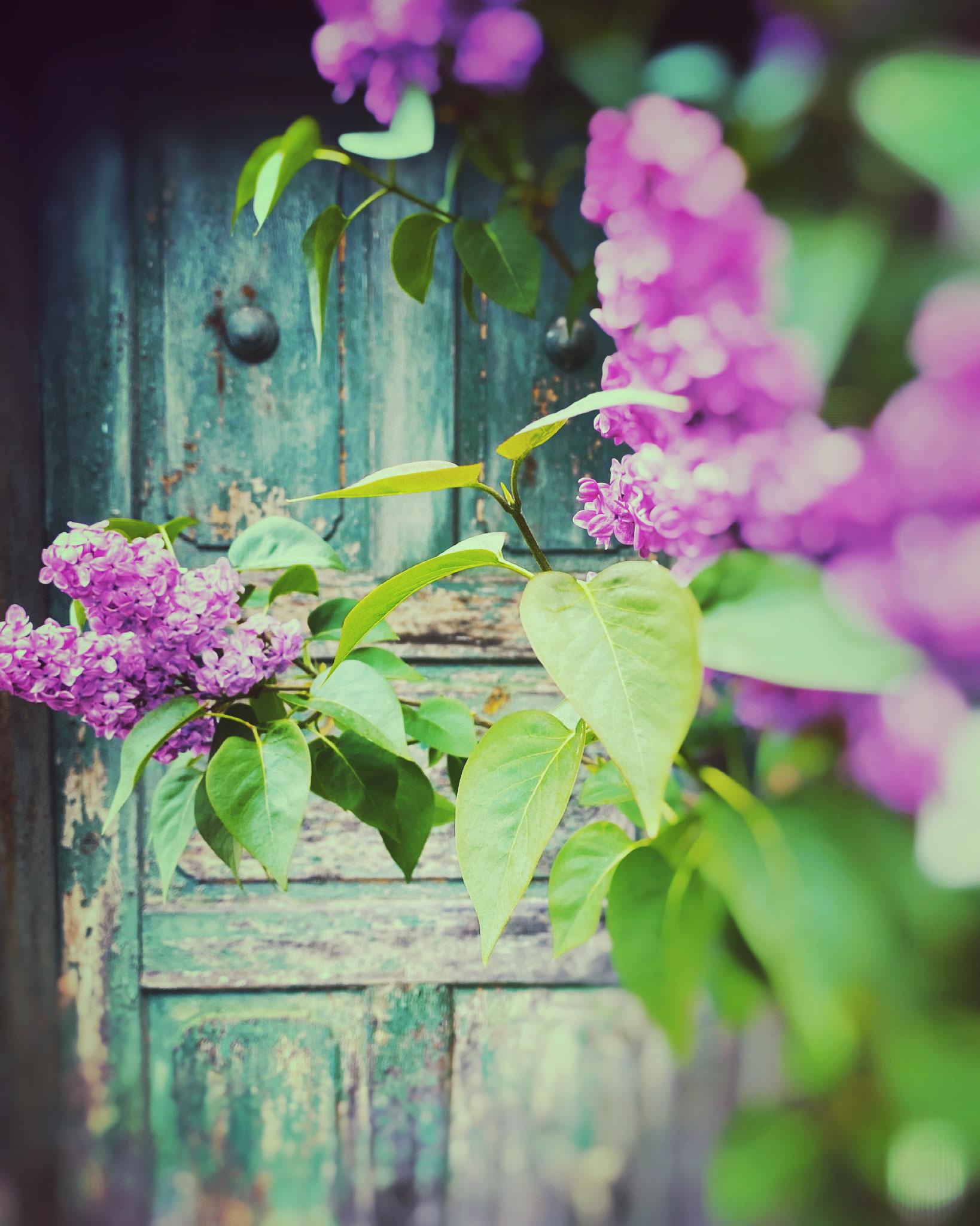 Schöne grüne vintage Tür samt Flieder :-)