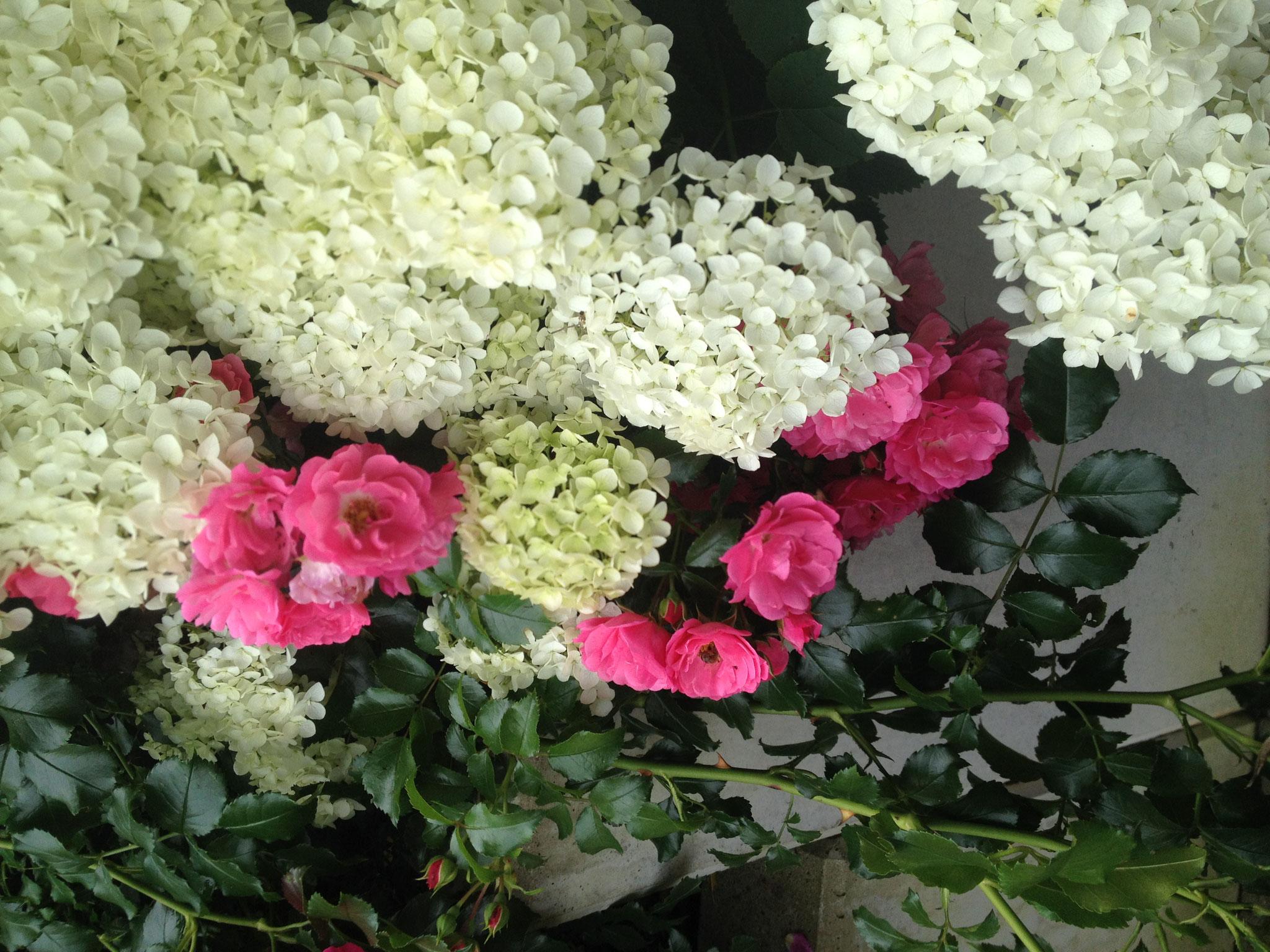 Die Blütenpracht?