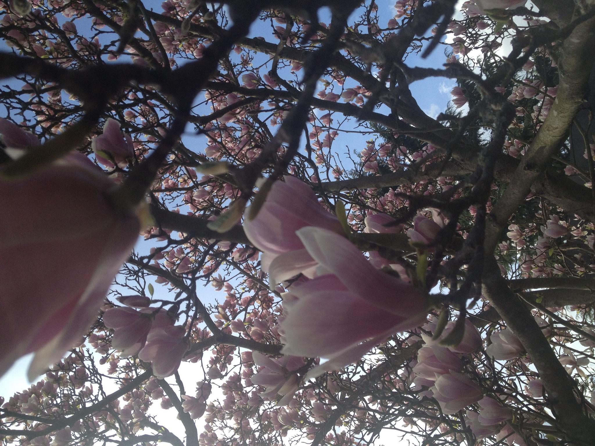 Der Frühling?