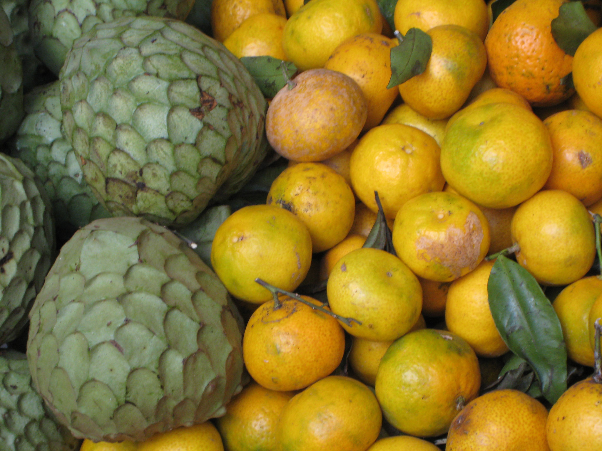 Die Vielfalt der Früchte?