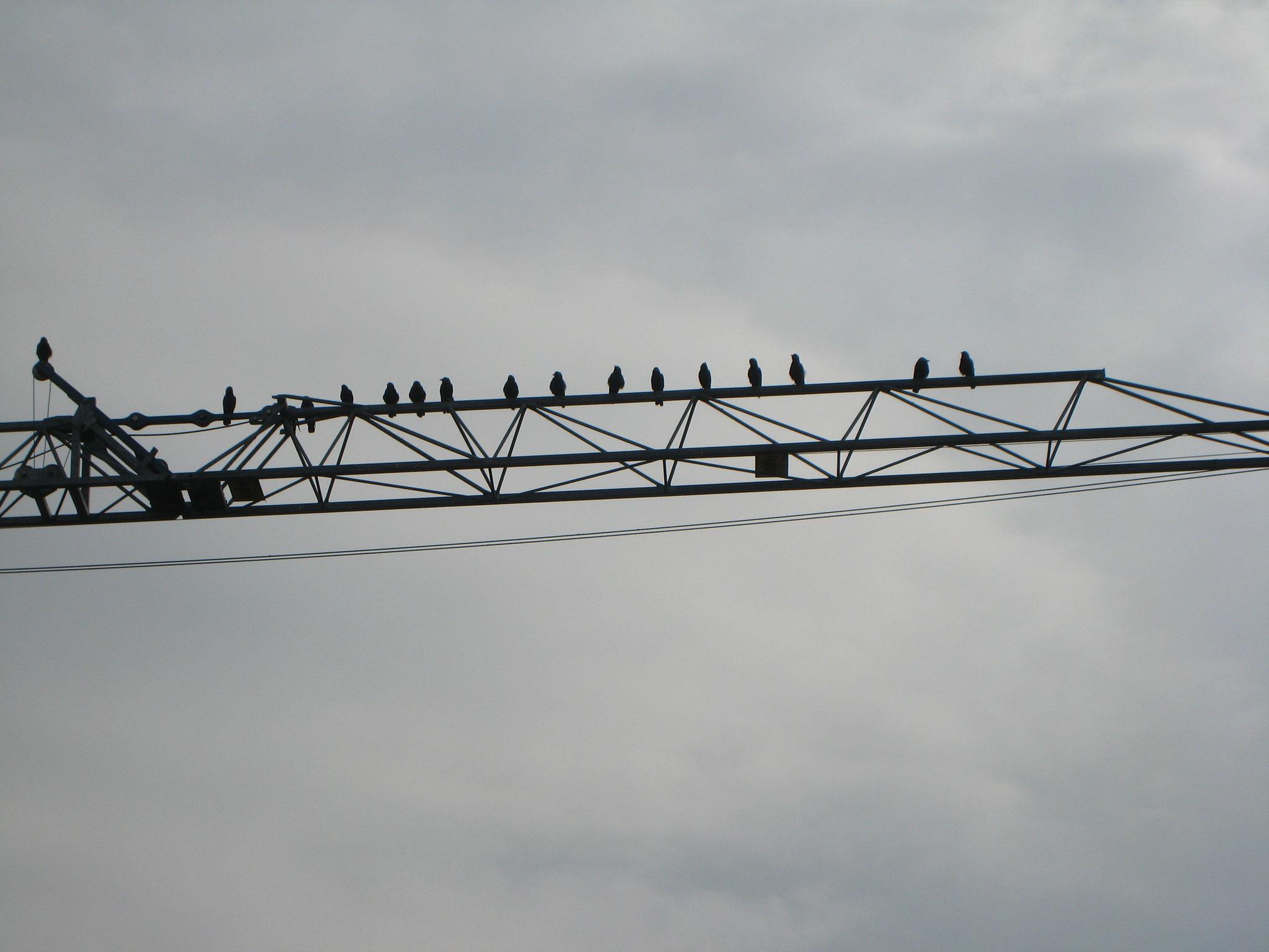 Die Melodie der Vögel?