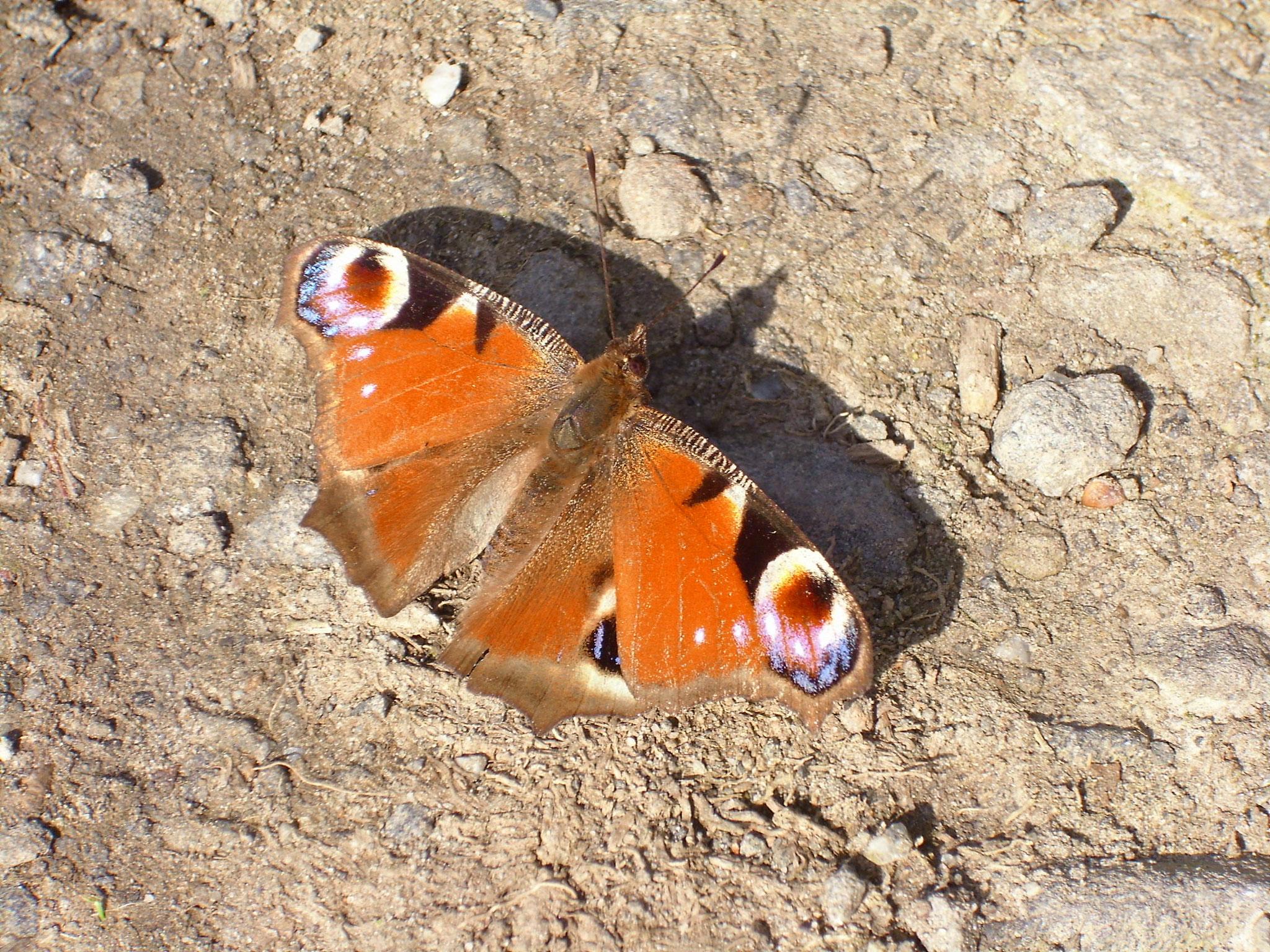 Der Flügelschlag eines Schmetterlings?
