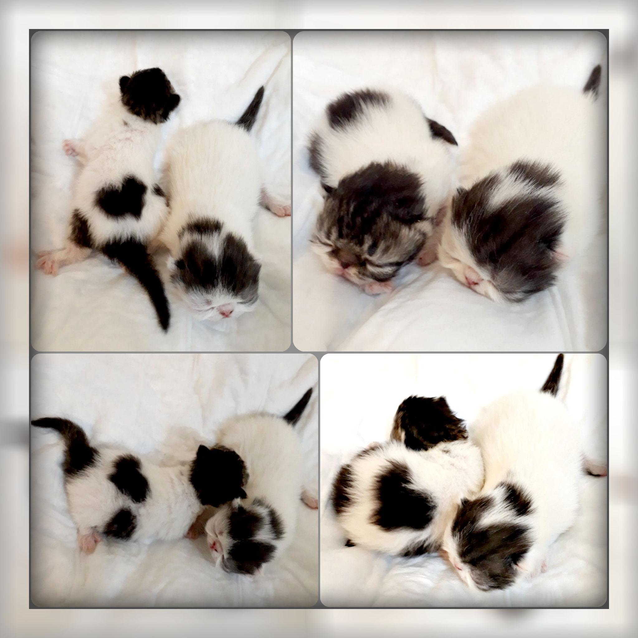 18/04/19 Два котика фото еще слепых.