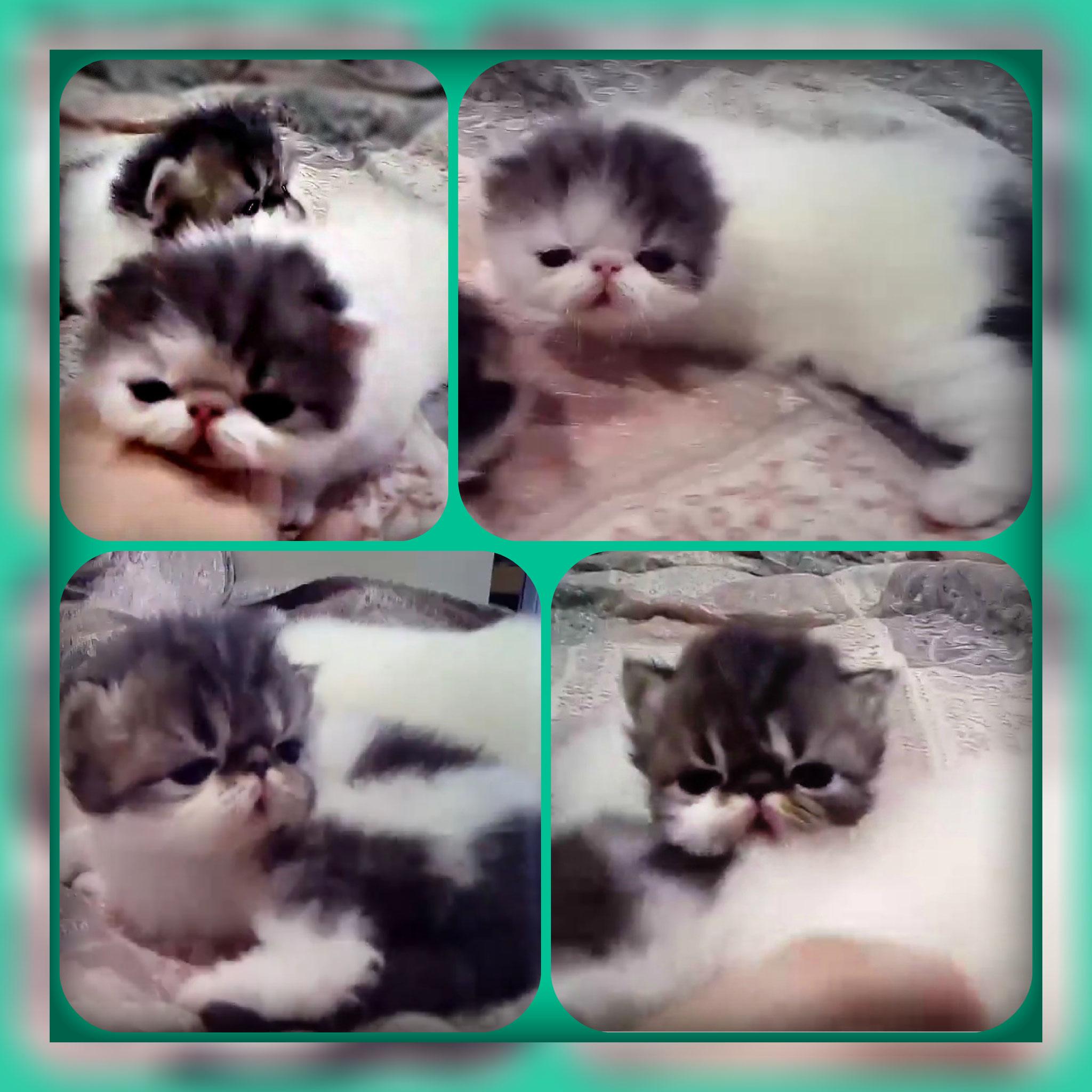 Два котика, открыли глазки