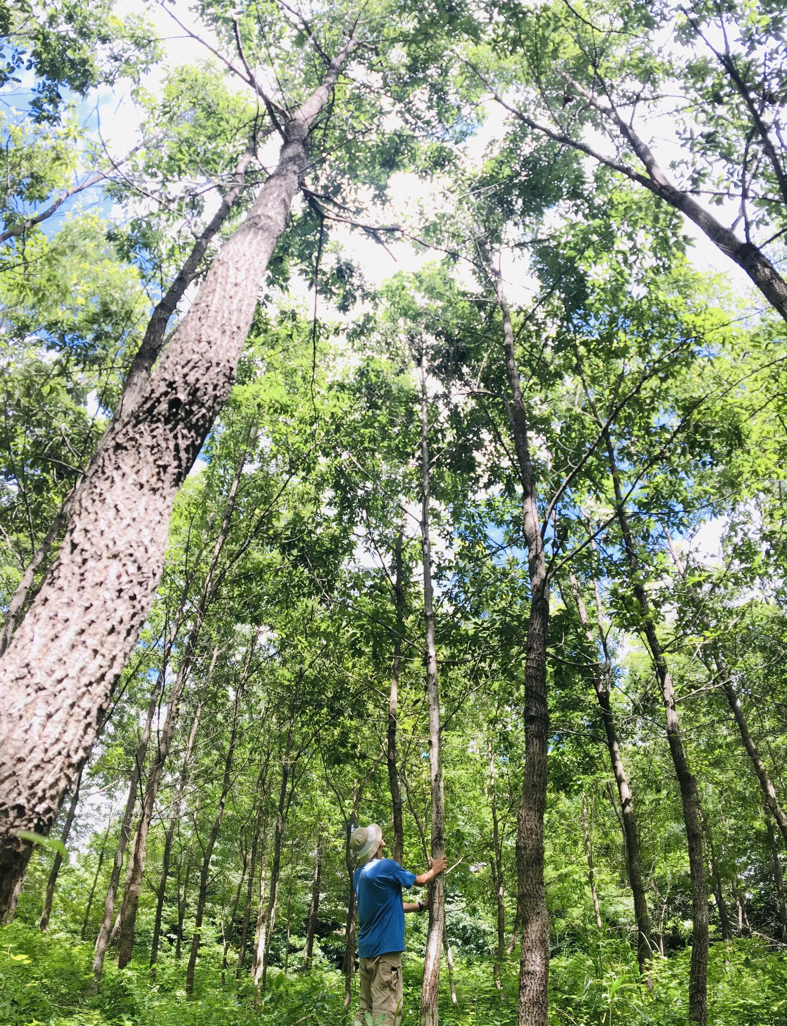 約20年かけて手入れし、森を育てる