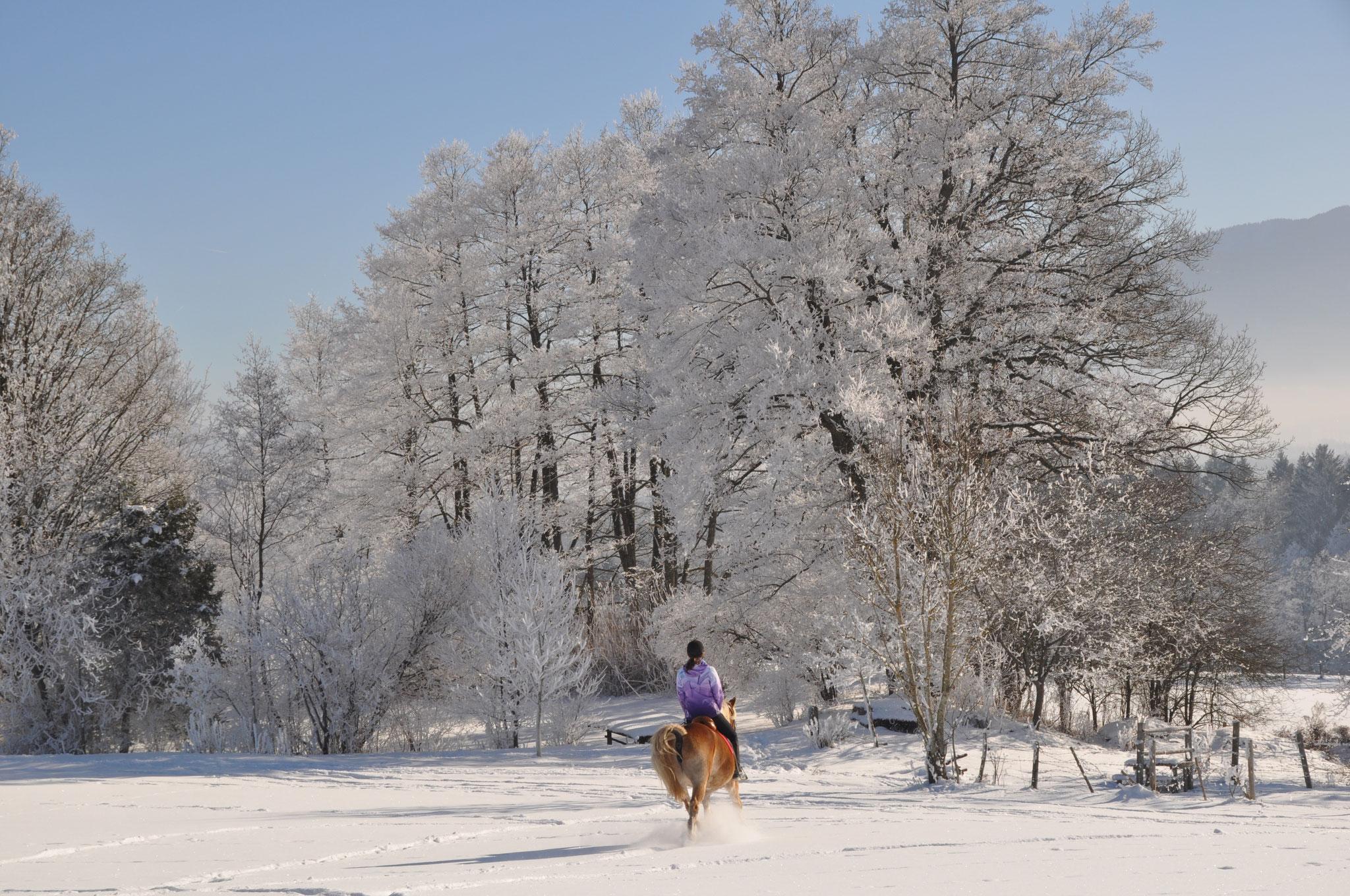 Ausritt im Schnee