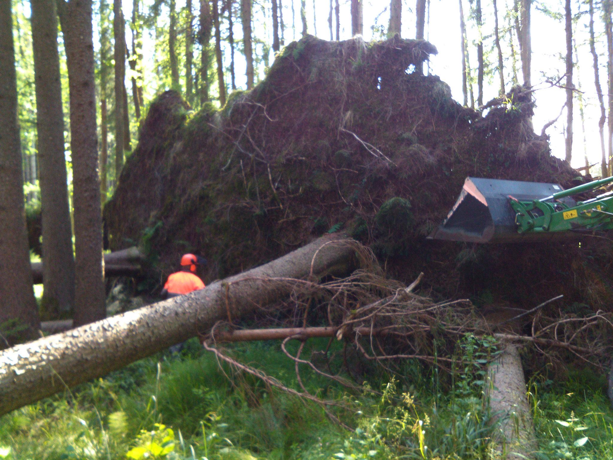 Sturmholzaufarbeitung