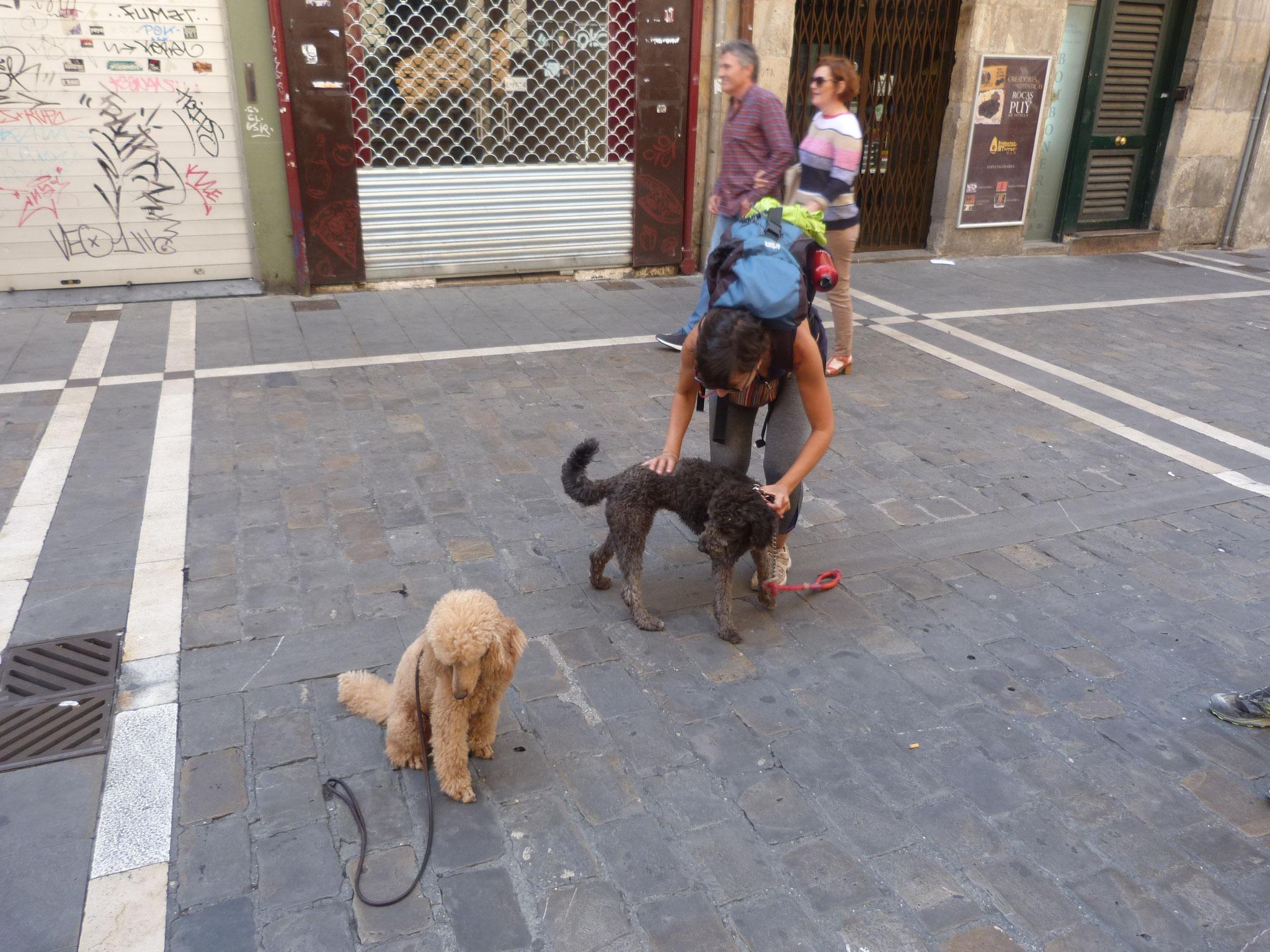 ein anderer Pilgerhund