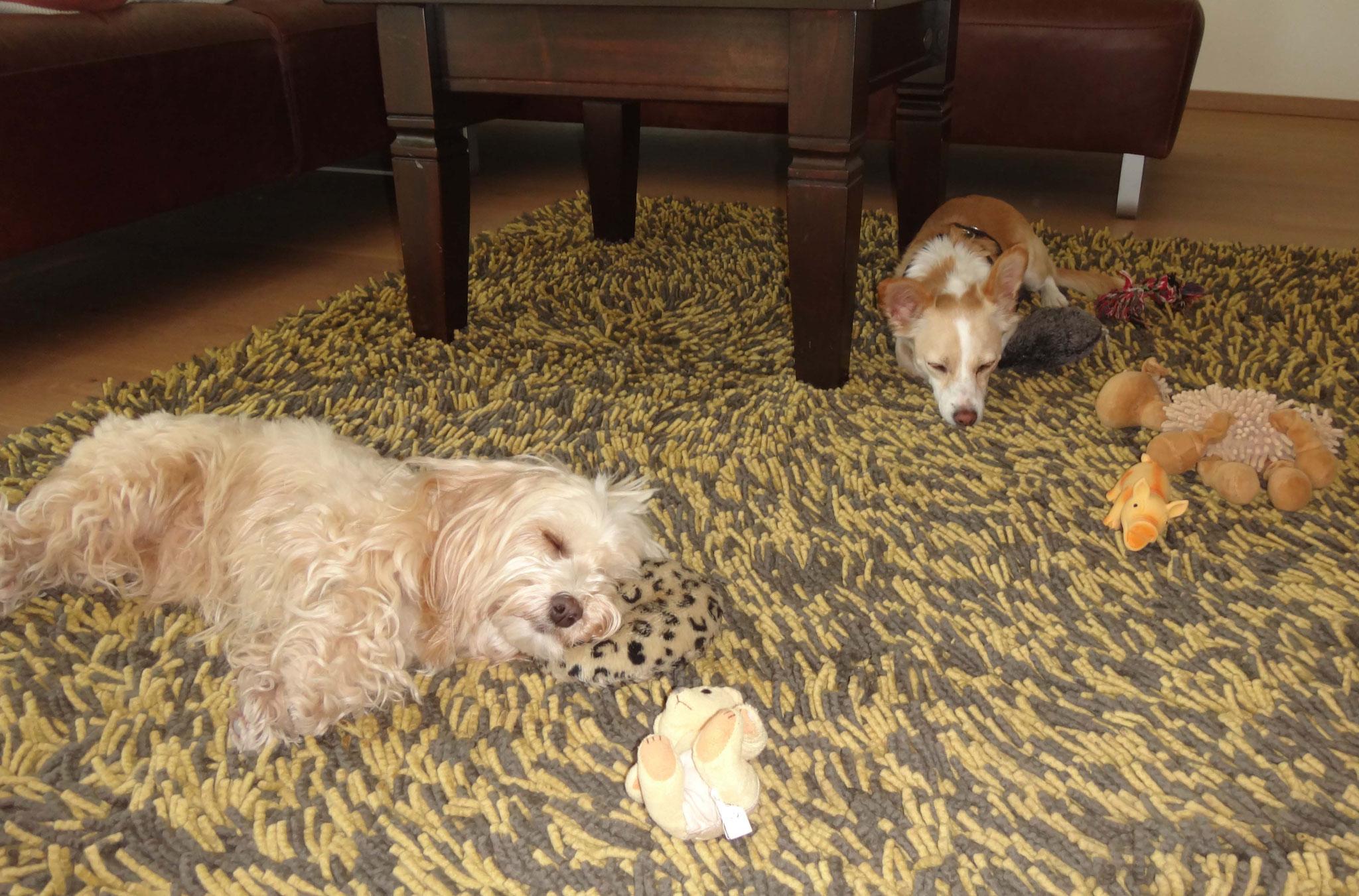 Diesen Teppich lieben alle Hunde, er ist anscheinend bequemer als die Körbchen...