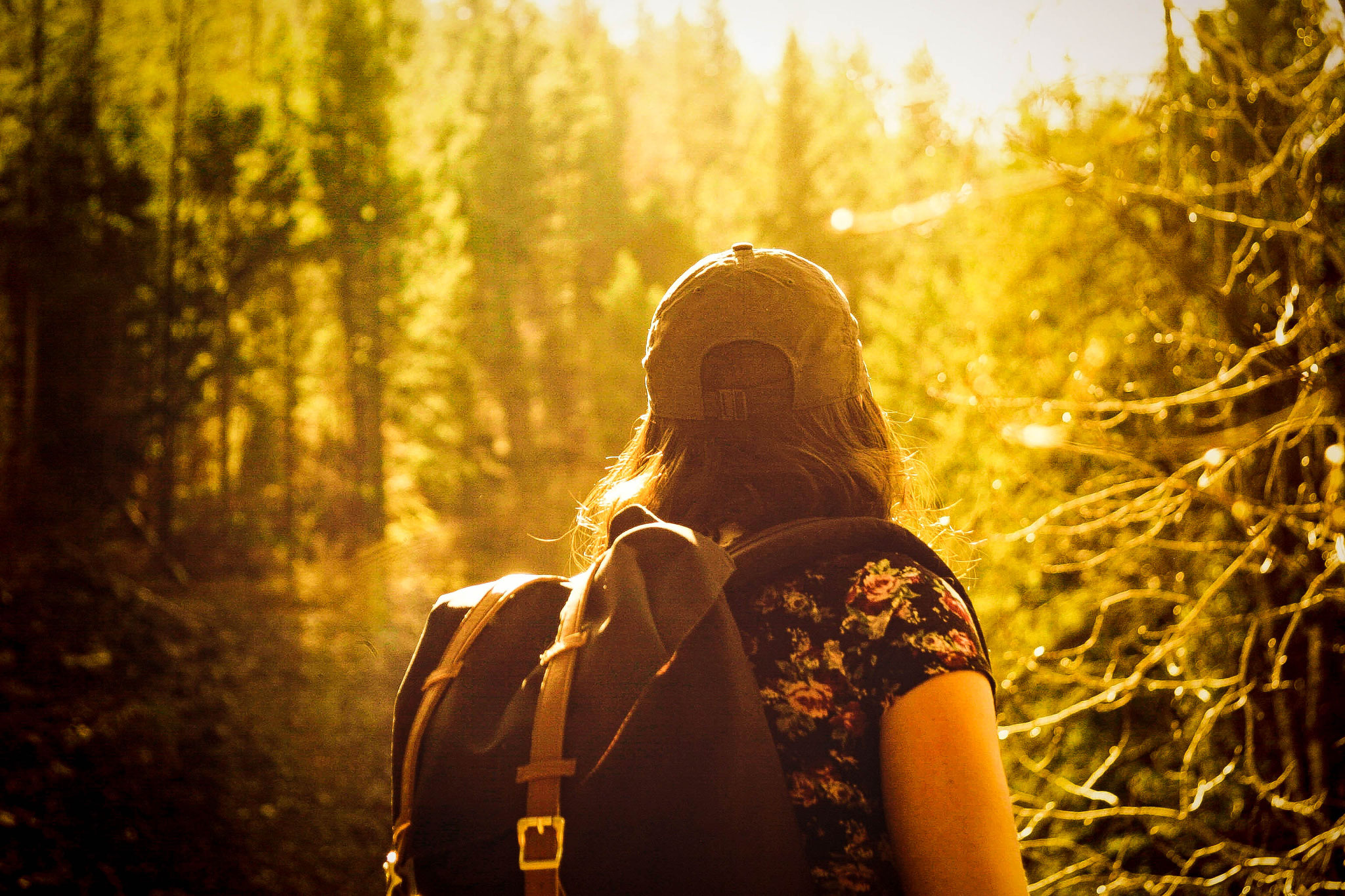 Fasten | Wandern | Waldbaden |