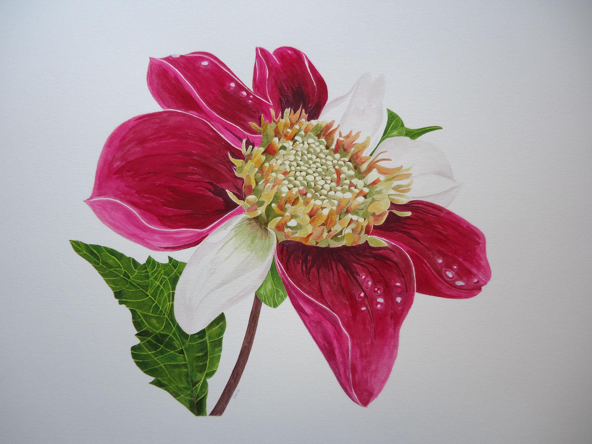 DAHLIA - Aquarell  70 x 90 cm