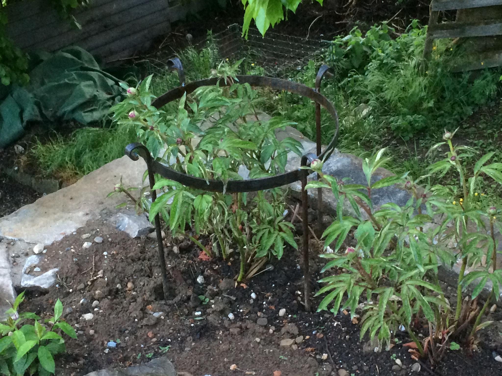 Pflanzenring