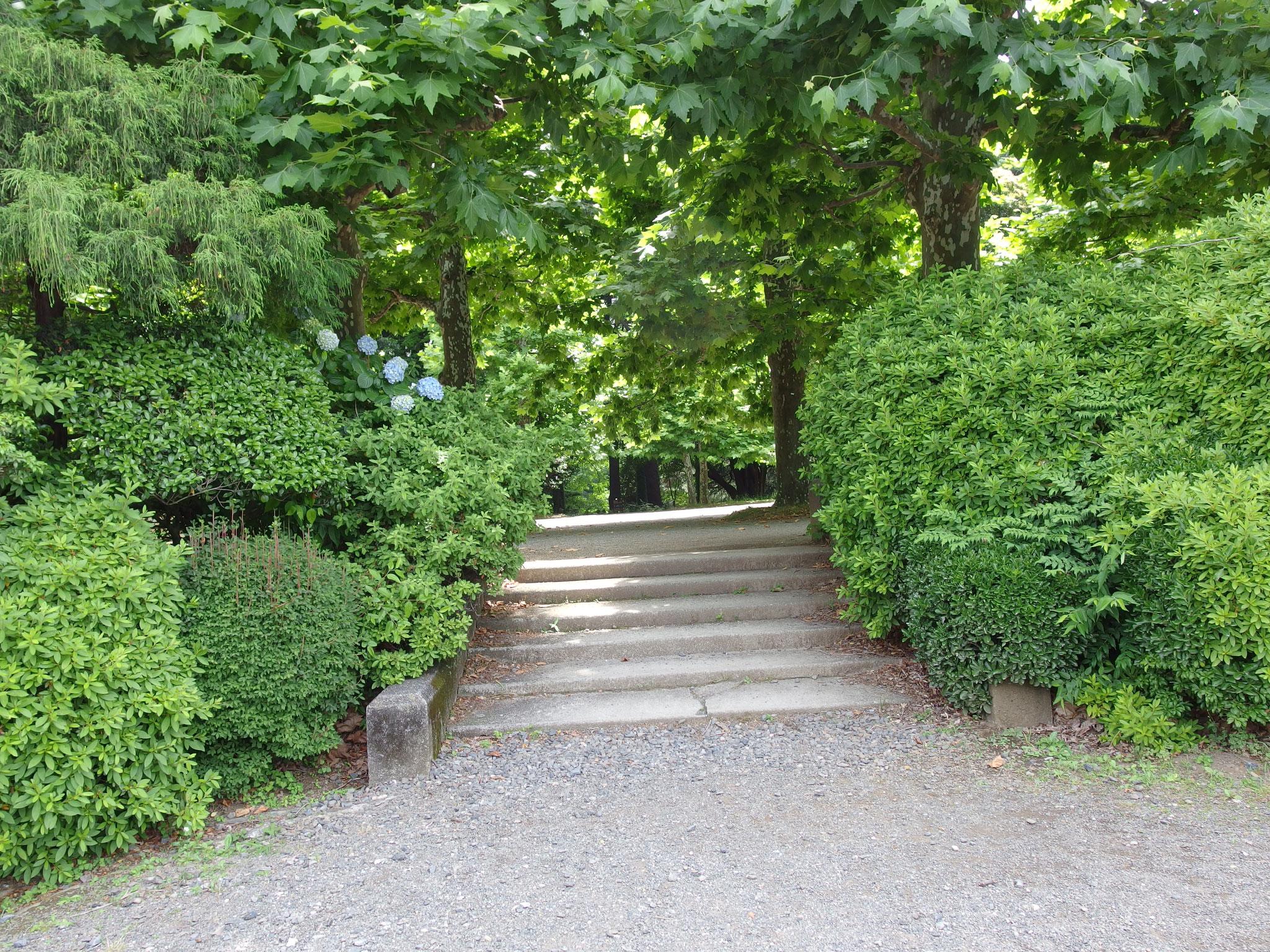 プラタナス並木からバラ花壇へ