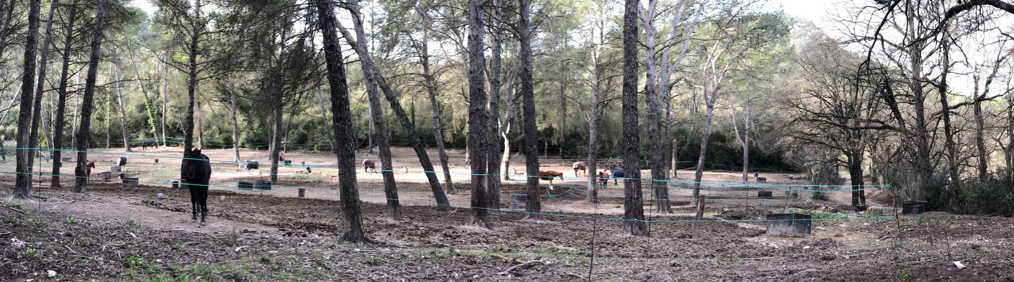 Enclos à chevaux de la ferme de Font Blanche