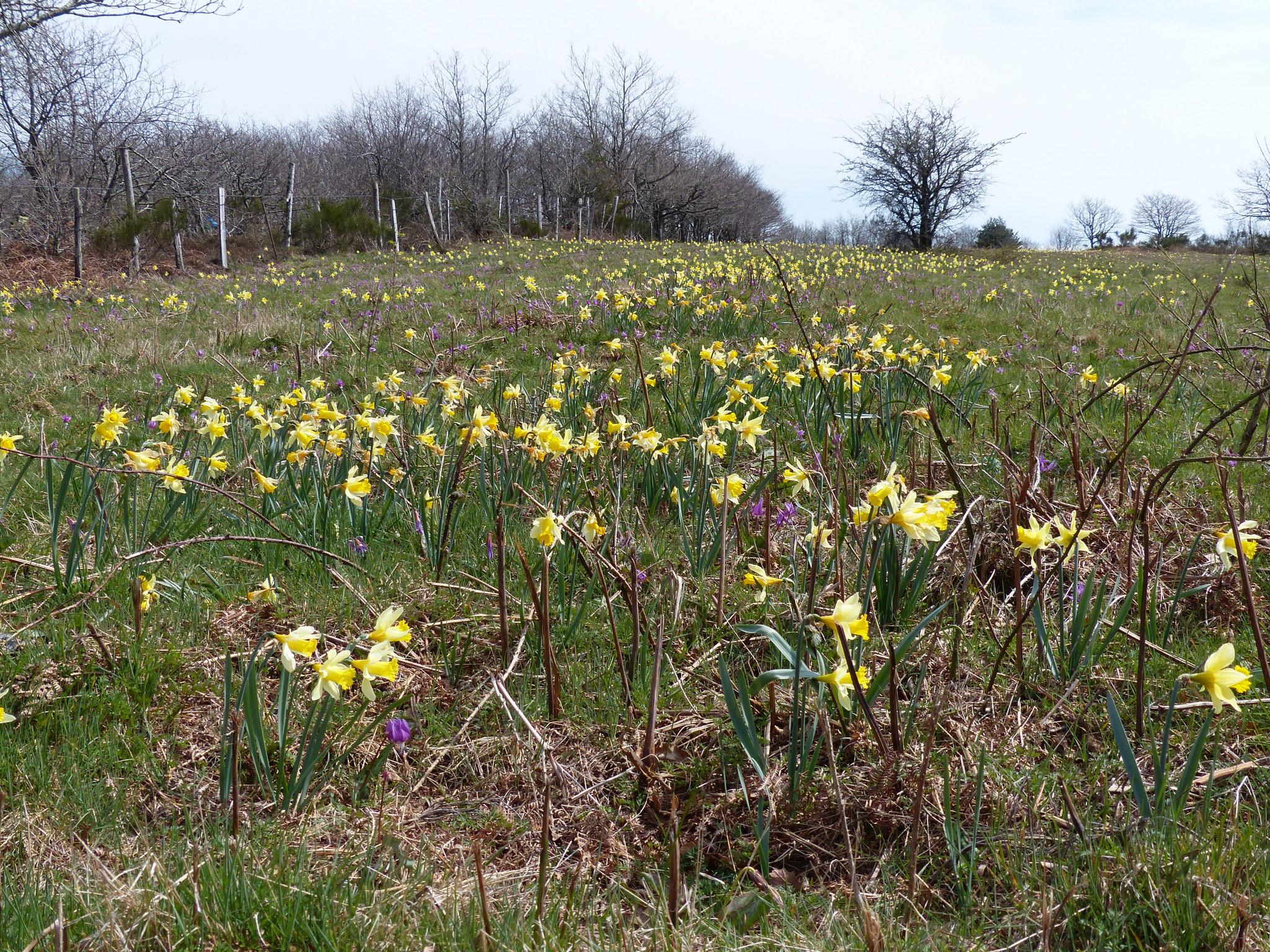 Un champs de fleur