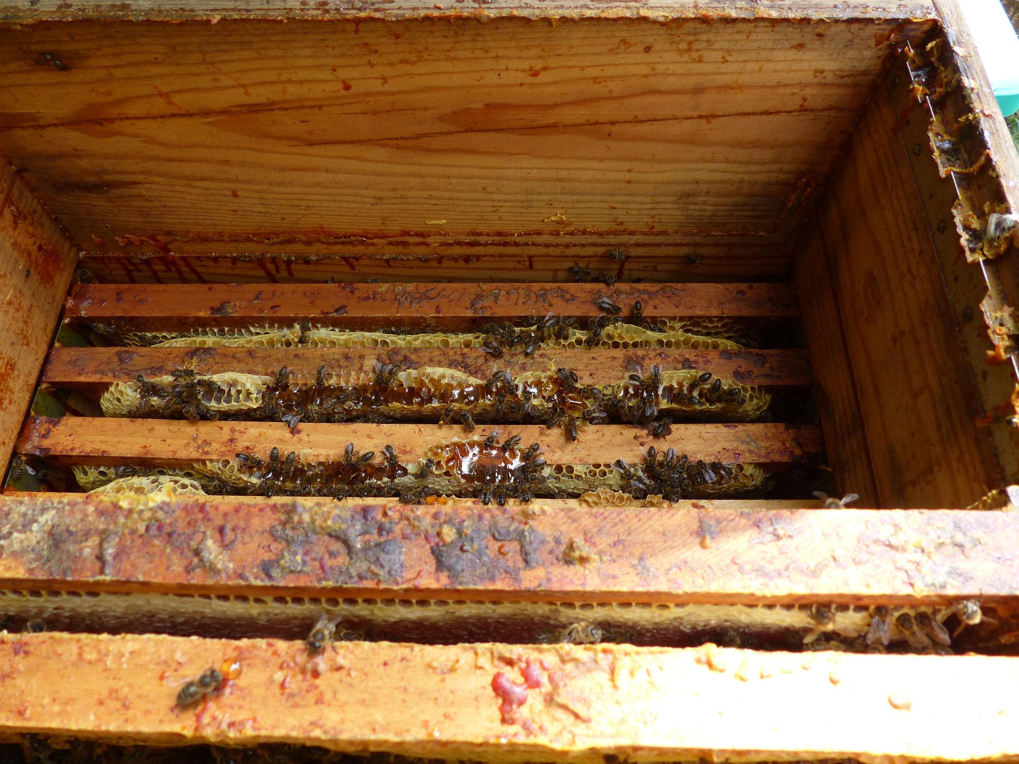 L'interieur de la ruche