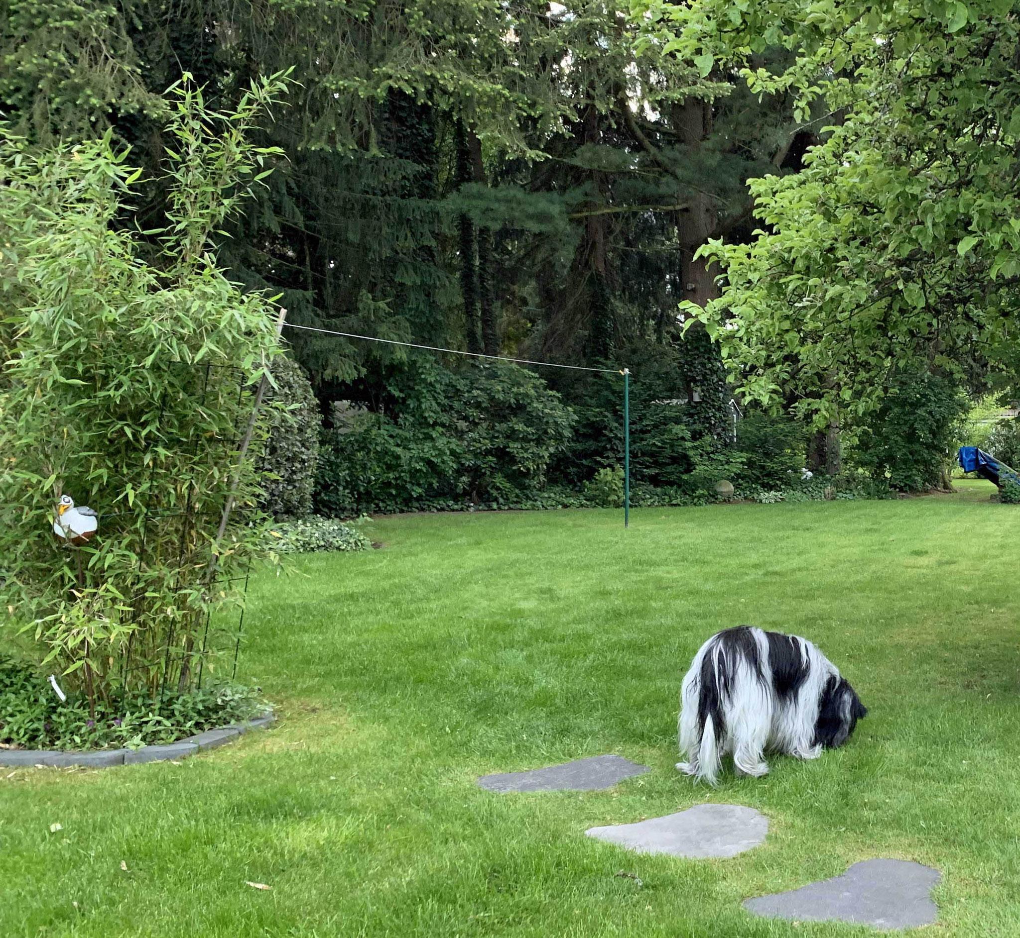 Erstmal schnüffeln, wer alles so im Garten unterwegs war, ...