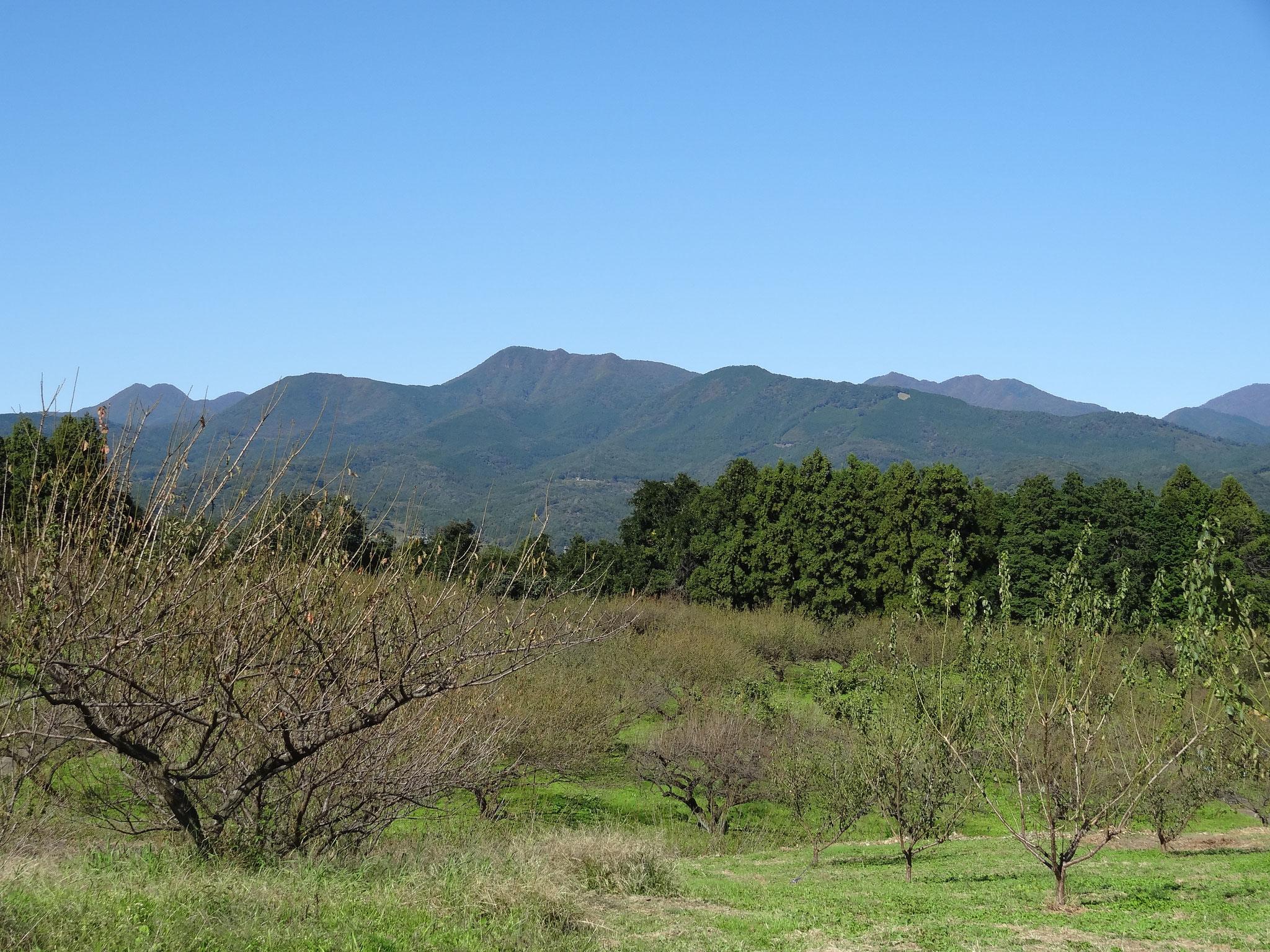 榛名山のふもとののどかで美しい梅園でした。