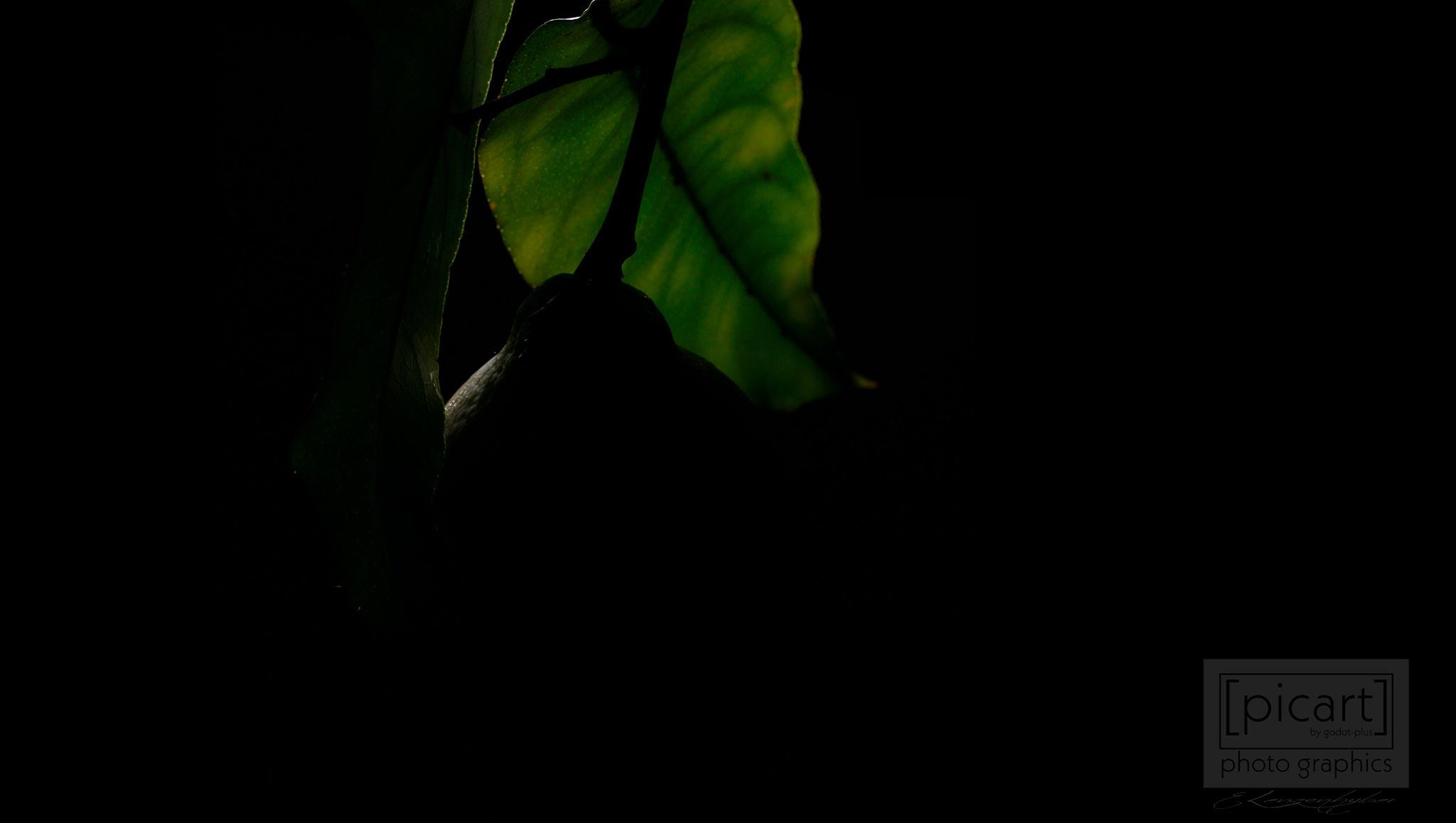 Bestellnummer: LK015  |  Low Key-Fotografie – Zitronenbaum © [:picart]by godot-plus, Eva Lenzenhuber